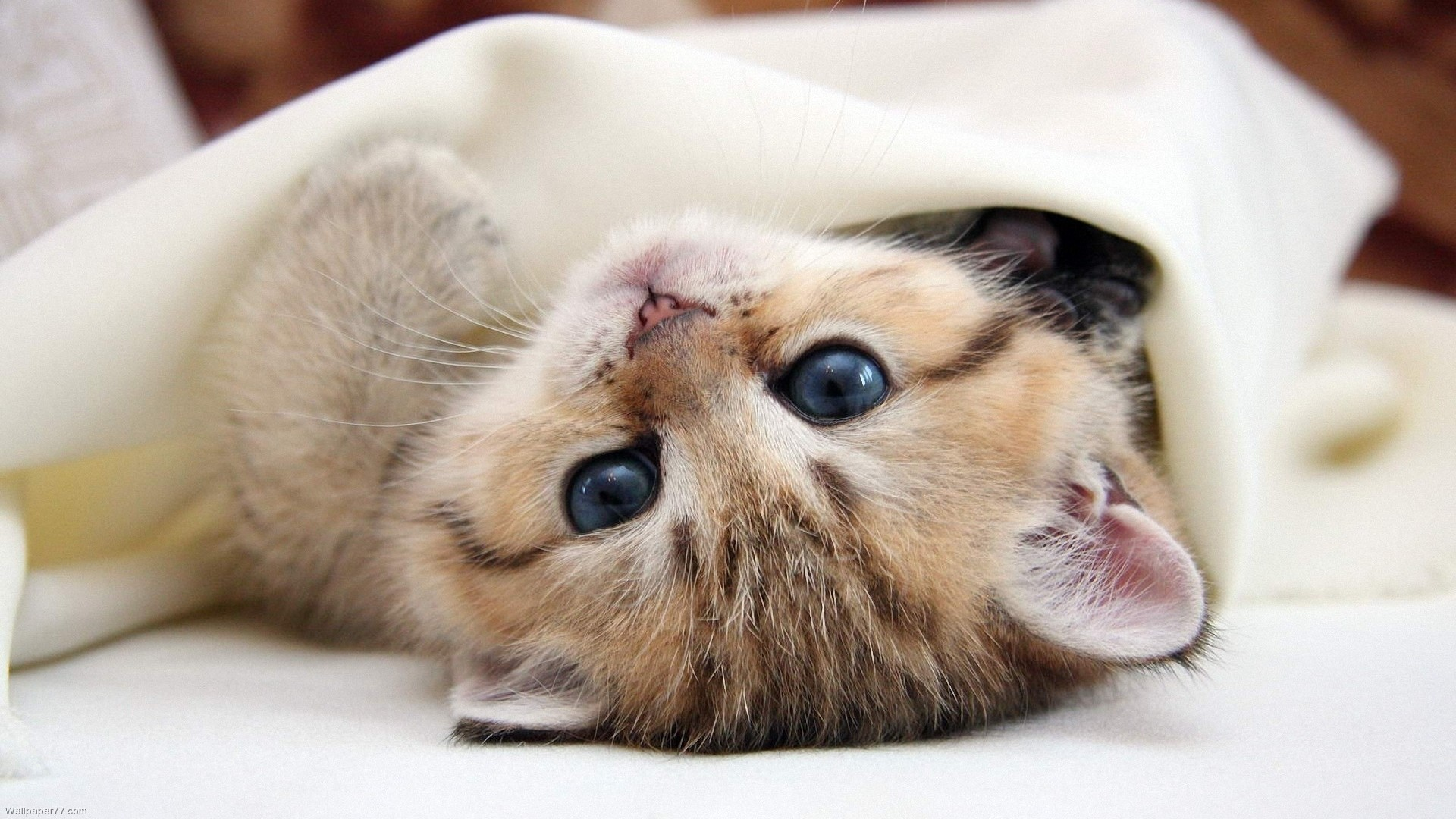 1920x1080 High Resolution Cute Baby Animal Kitty Cat Wallpaper HD 17 Full .