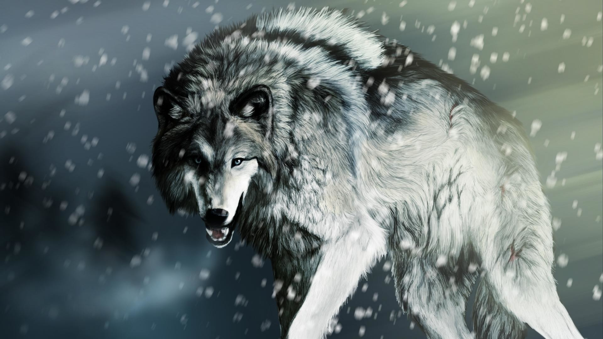 1920x1080 Gray Wolf Wallpaper | Gray Wolf Images Free | Cool Wallpapers