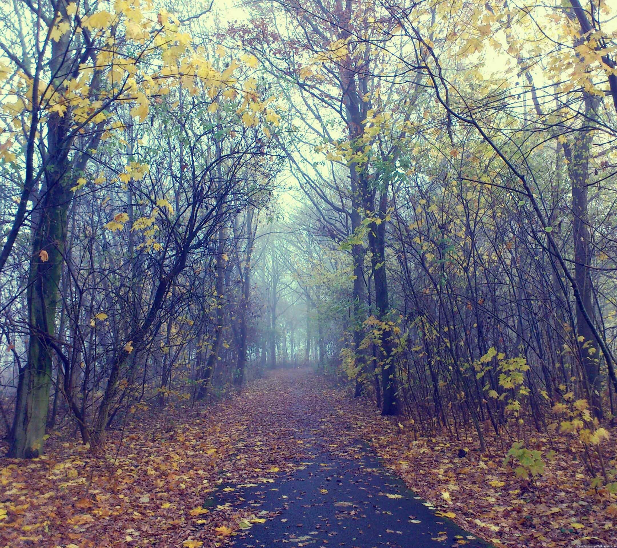 autumn screen wallpaper 64 images