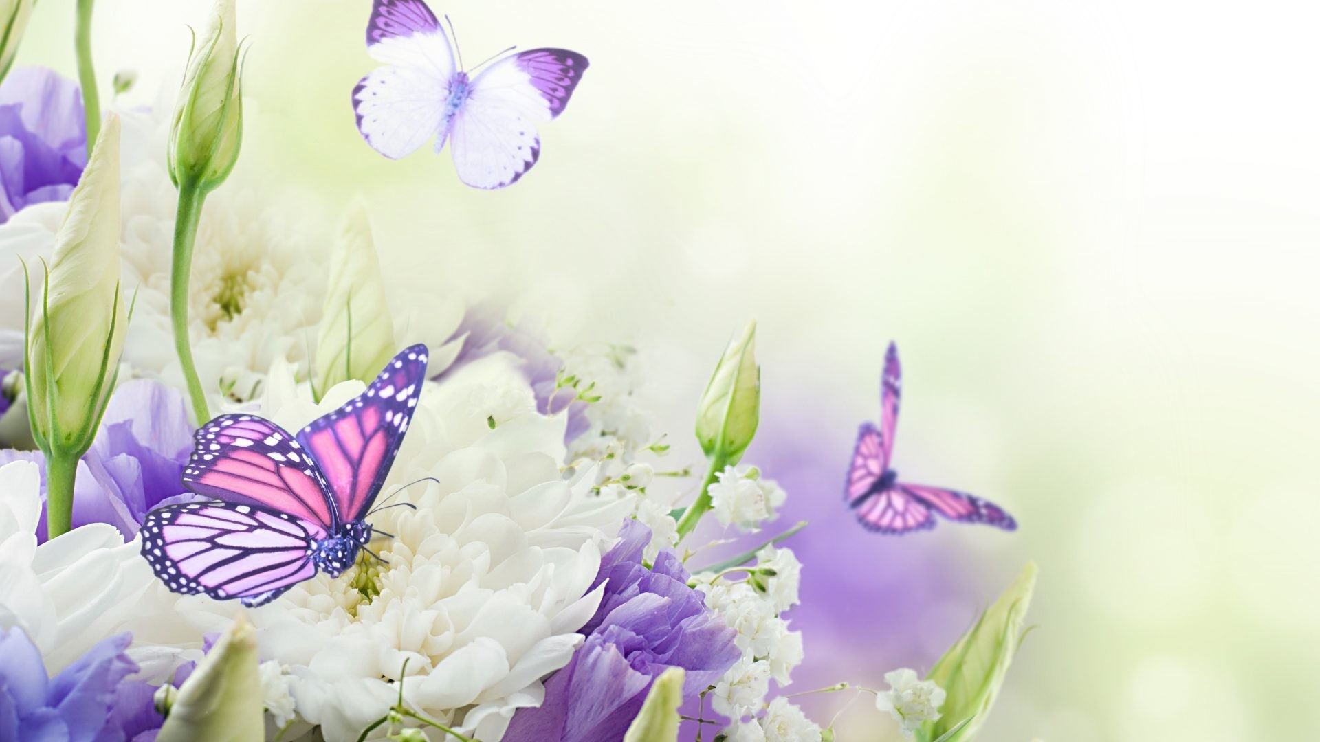 1920x1080 Butterflies Tag - Flowers Beautiful Butterflies Splendor Simply Nature  Flower Wallpapers Big Size for HD 16