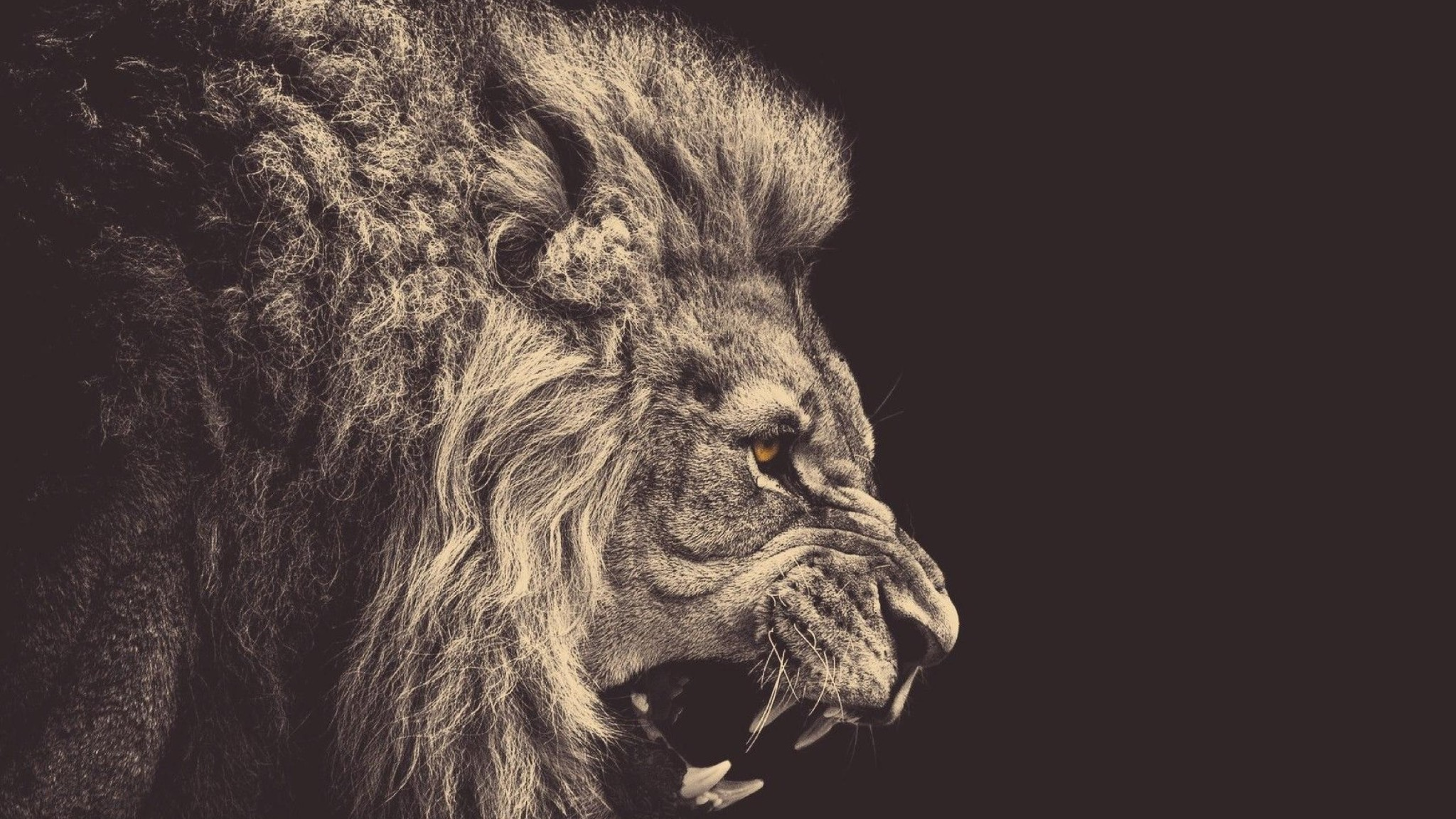2048x1152 Download Lion, Mane, Big Cat Wallpaper
