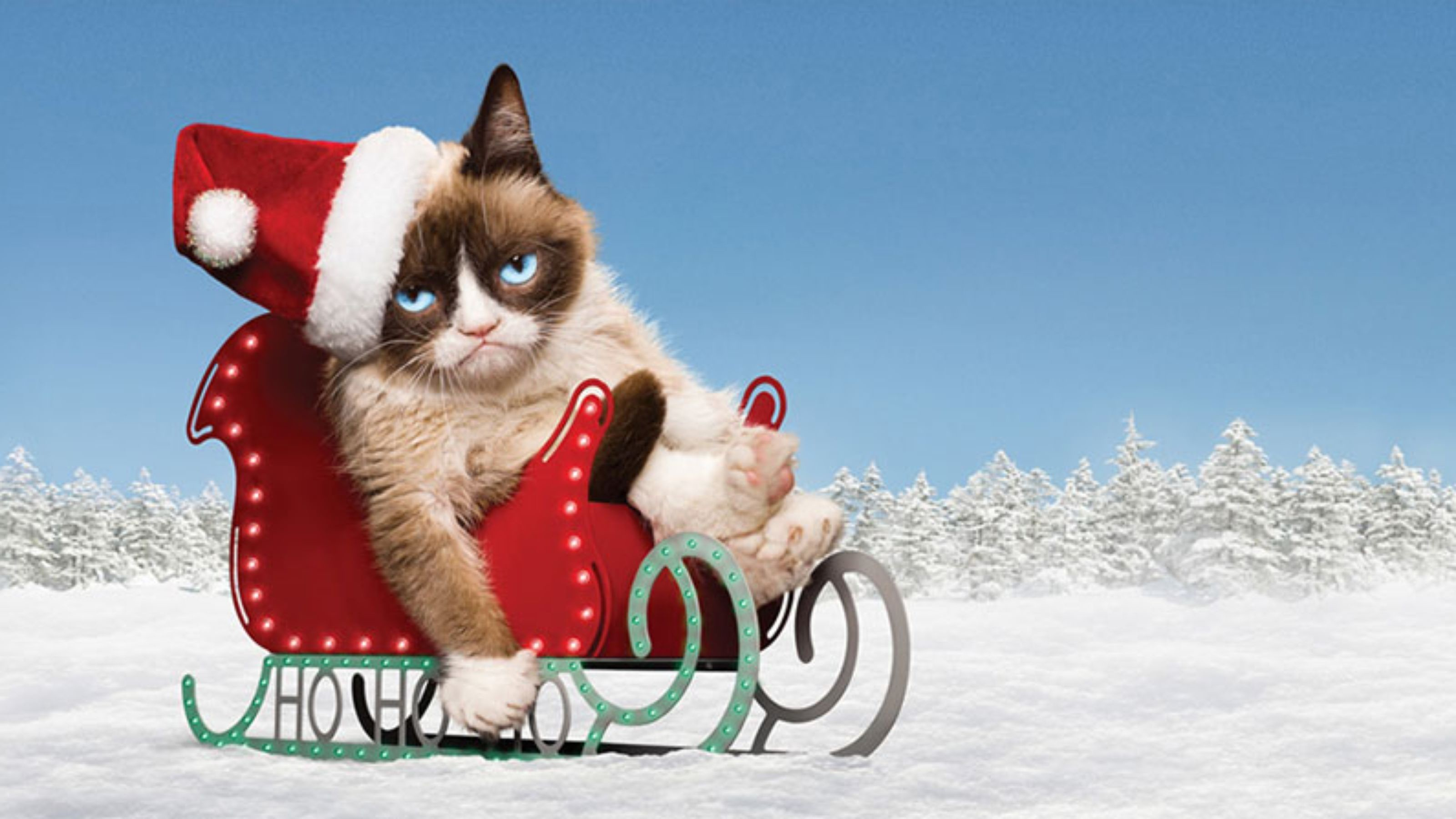 Christmas Cat Wallpaper (75+ images)