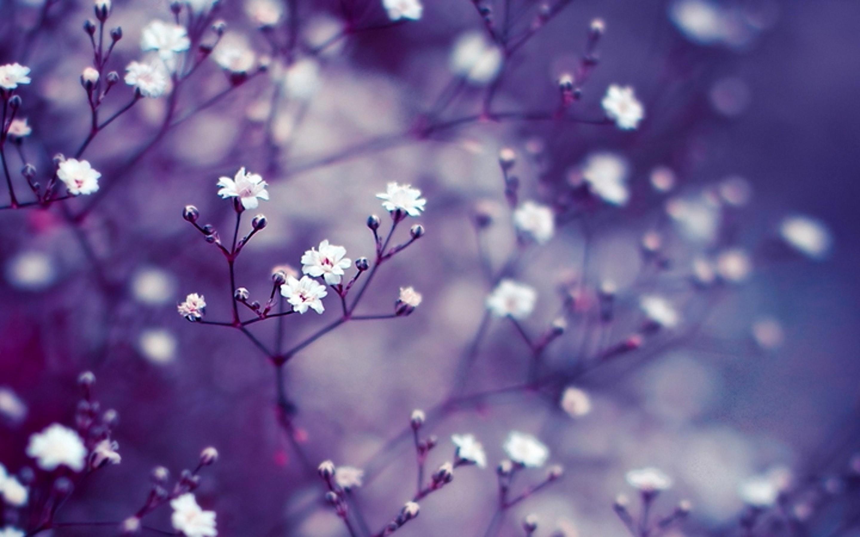 Beautiful Wallpaper Macbook Purple - 290443  Snapshot_563839.jpg