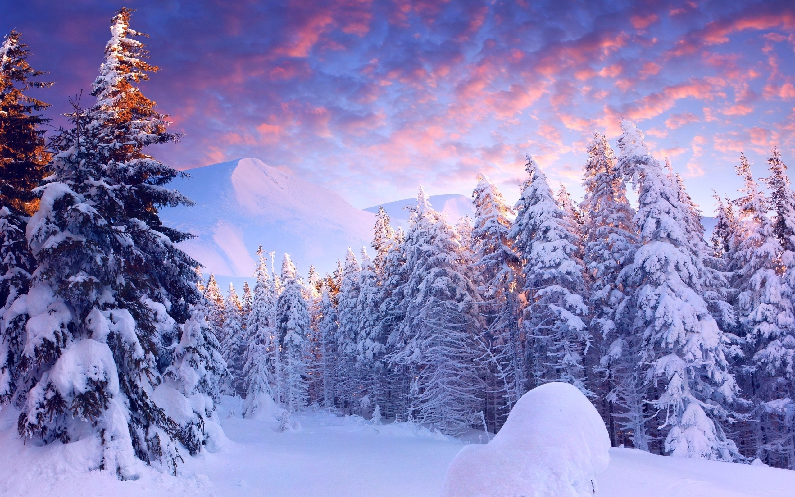 snow forest wallpaper 61 images