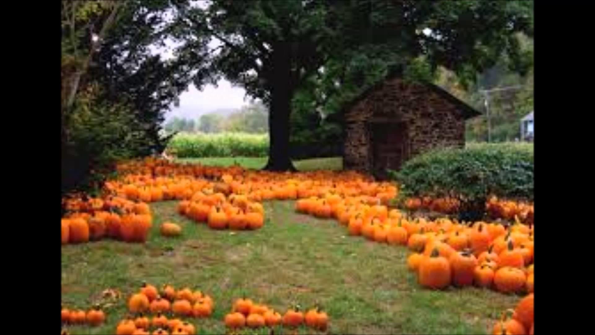 1197403 download fall pumpkin wallpaper 1920x1080 for ipad pro
