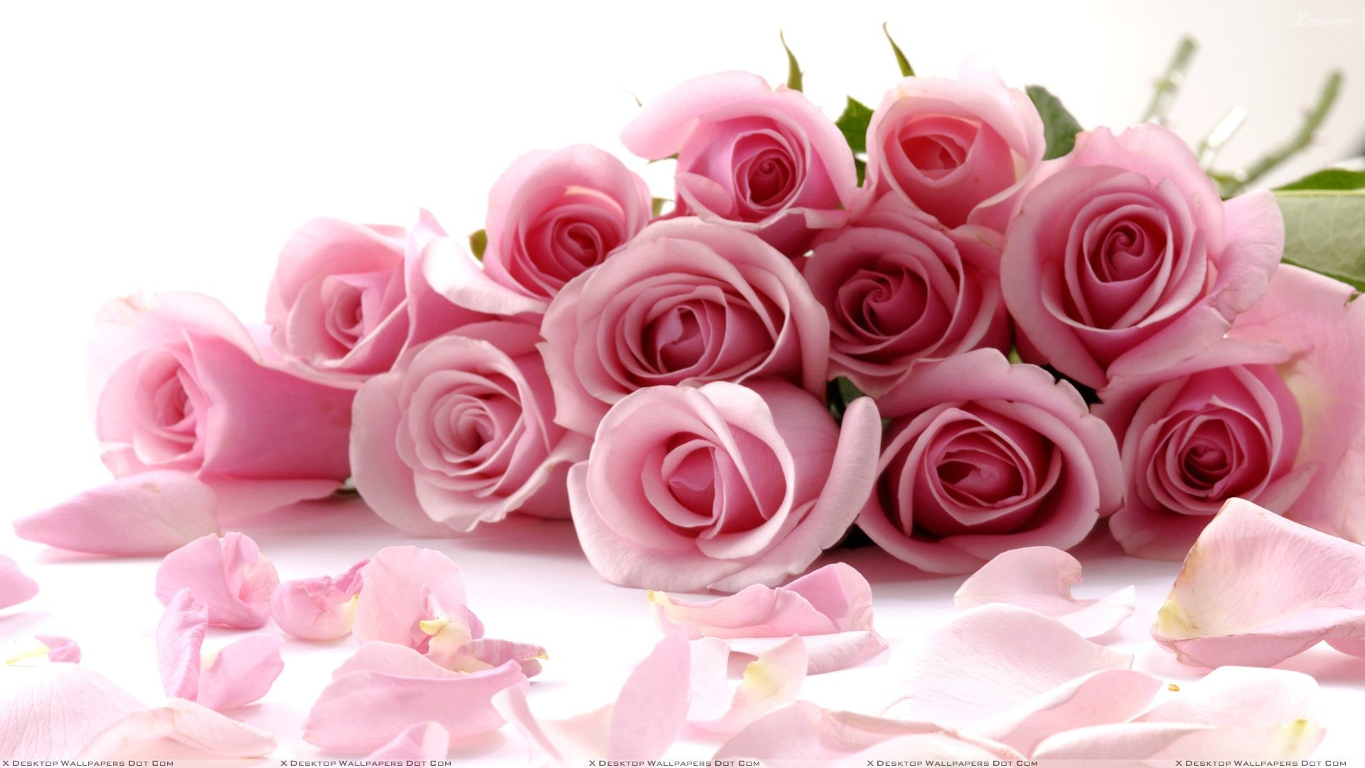 "1920x1080 You are viewing wallpaper titled ""Pink Roses On White Background ..."