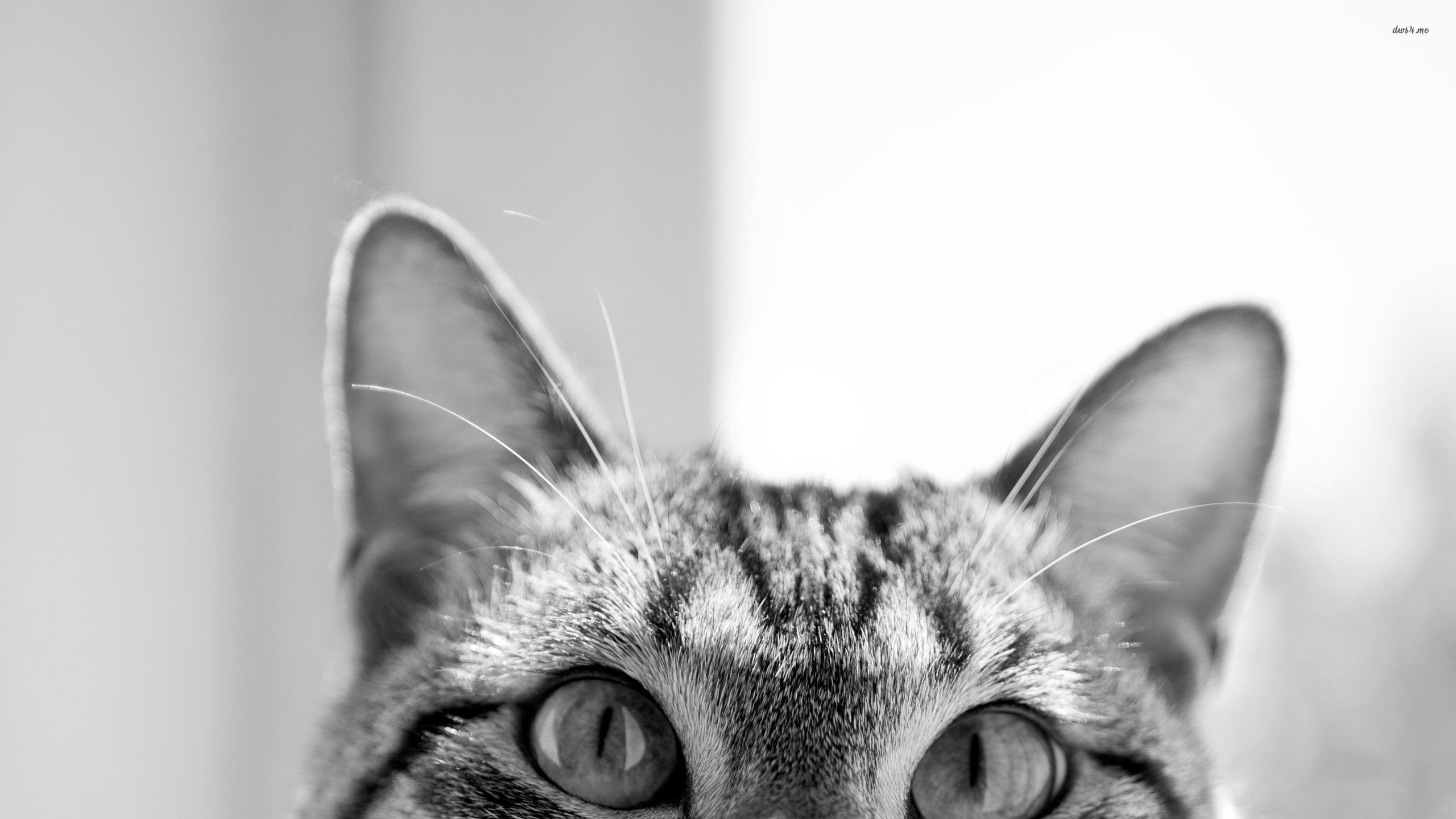 1920x1200 Cute Cat Background Wallpapers Default Resolution Download