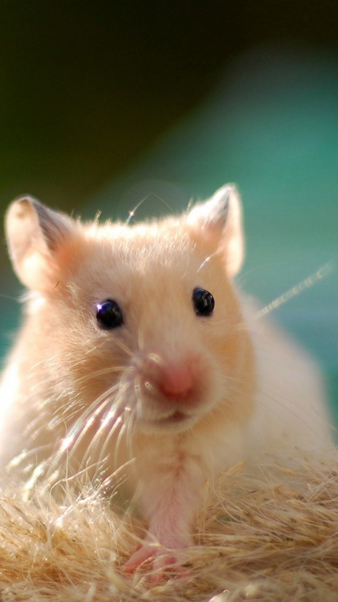 Cute xhamster