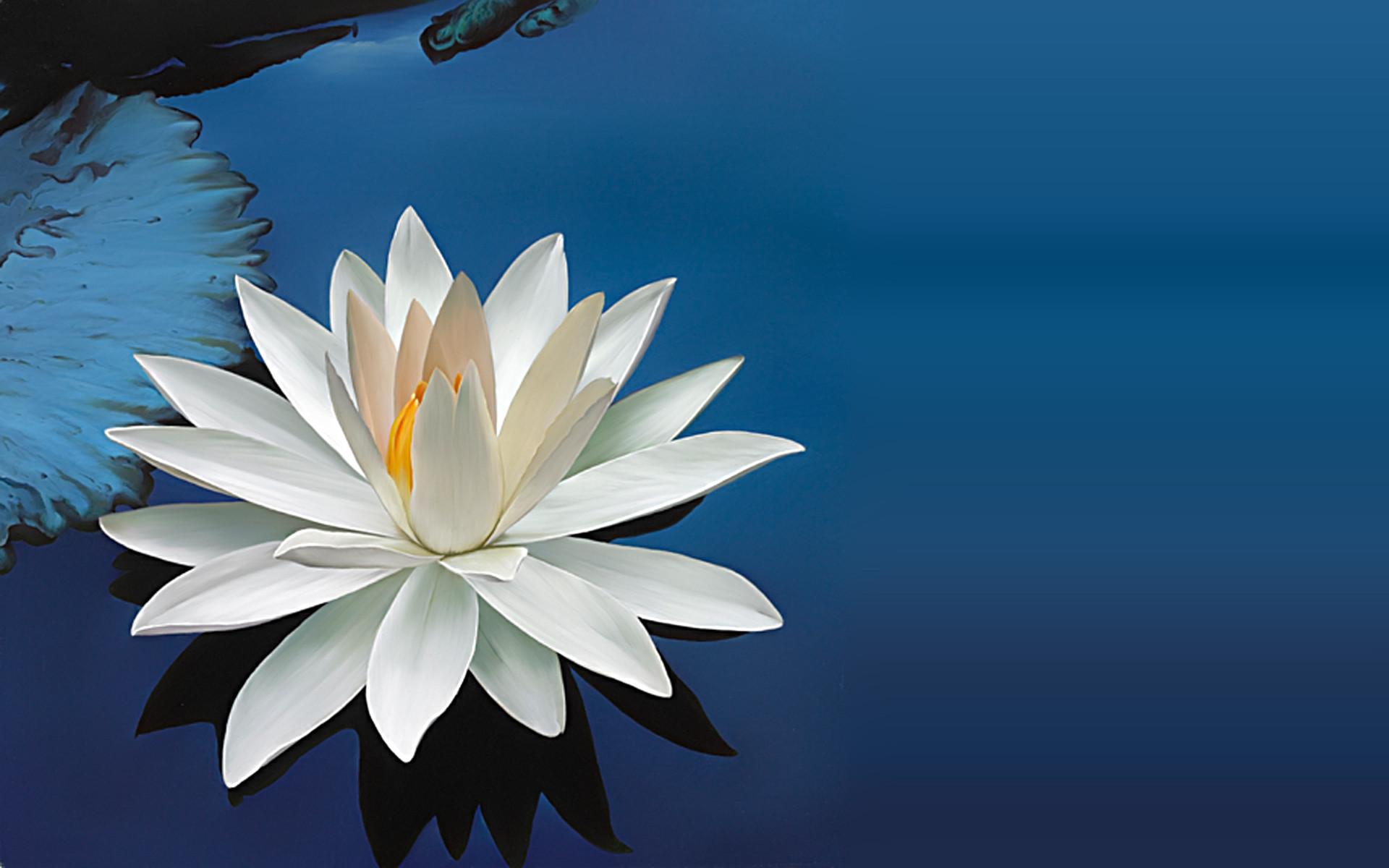 Lotus Flower Background 54 Images