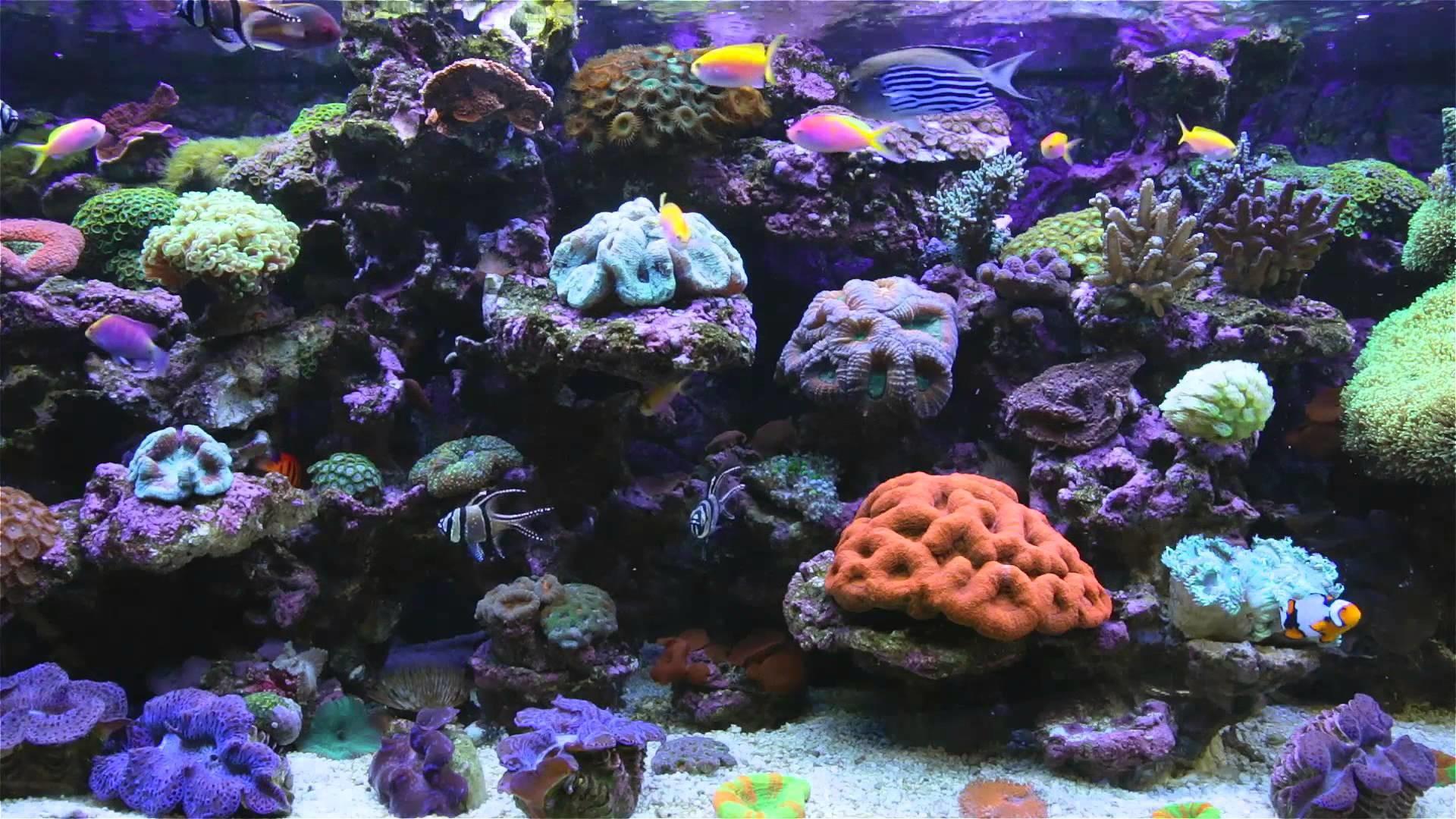 Desktop wallpaper aquarium free download
