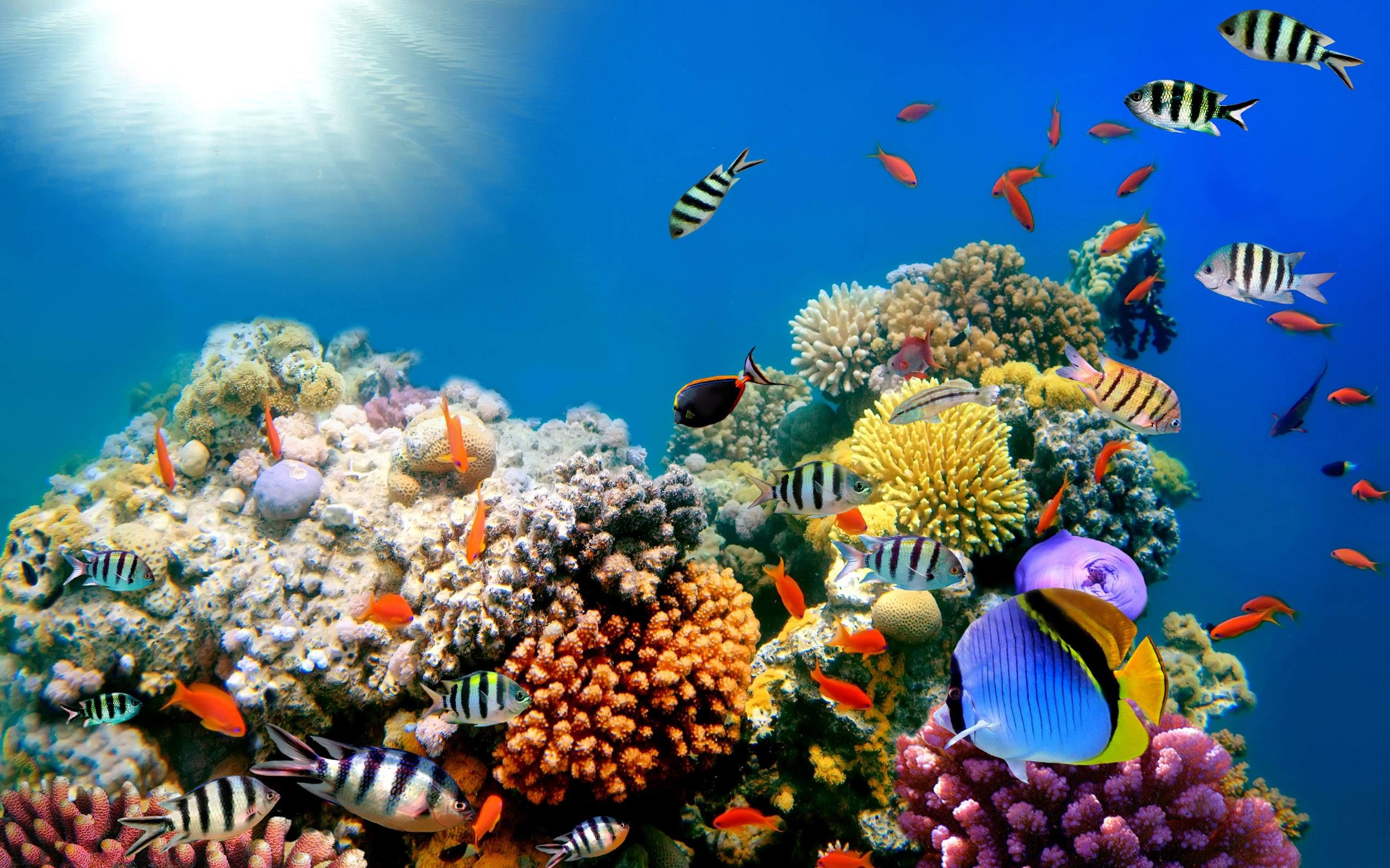 2560x1600 Coral Reefs Fish Background Wide or HD | Animals Wallpapers