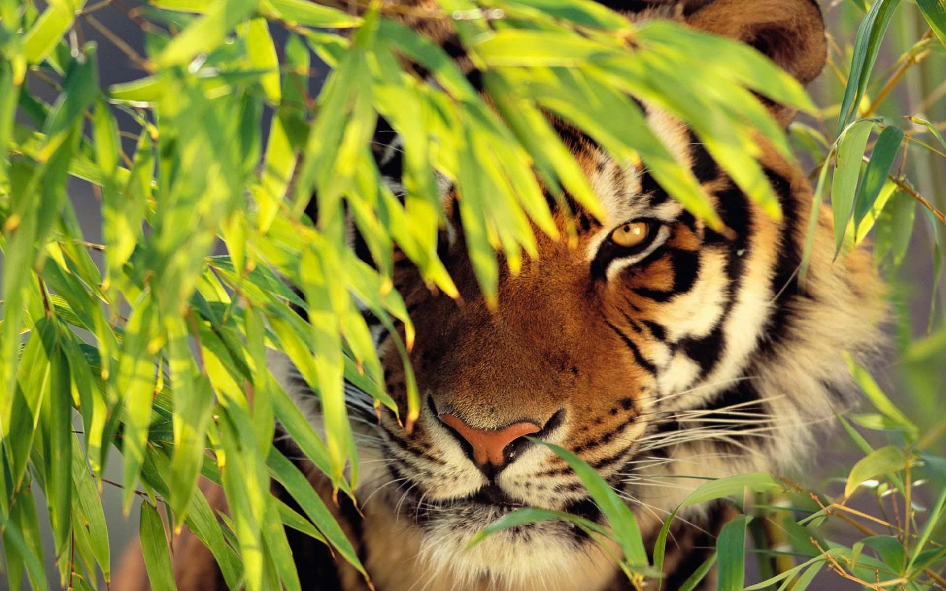 mac os x tiger wallpaper (63+ images)