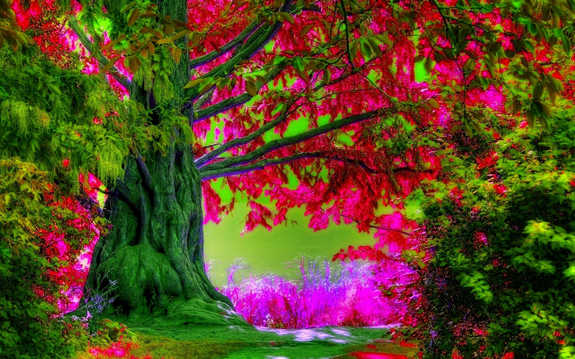 1920x1200 Spring Trees Wallpaper Desktop Widescreen 2 HD Wallpapers | Hdimges.