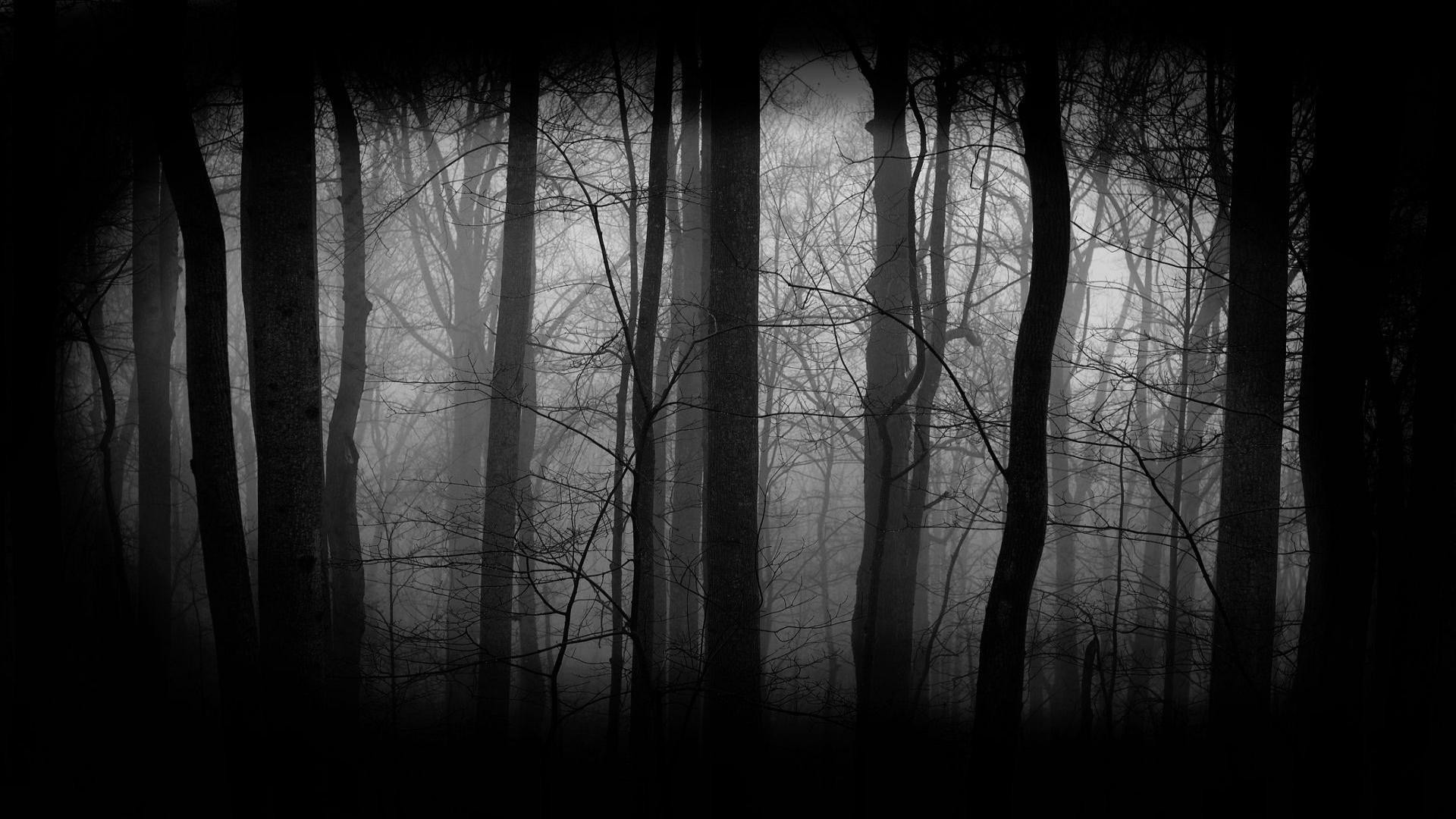 1920x1080 Dark-Woods-Background-Free-Download
