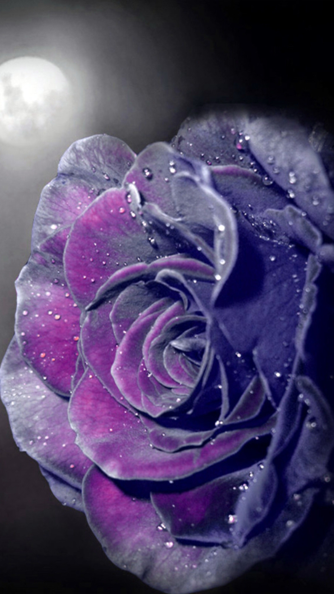 1920x1080 Preview Wallpaper Violet, Flowers, Close Up, Petals 1920x1080