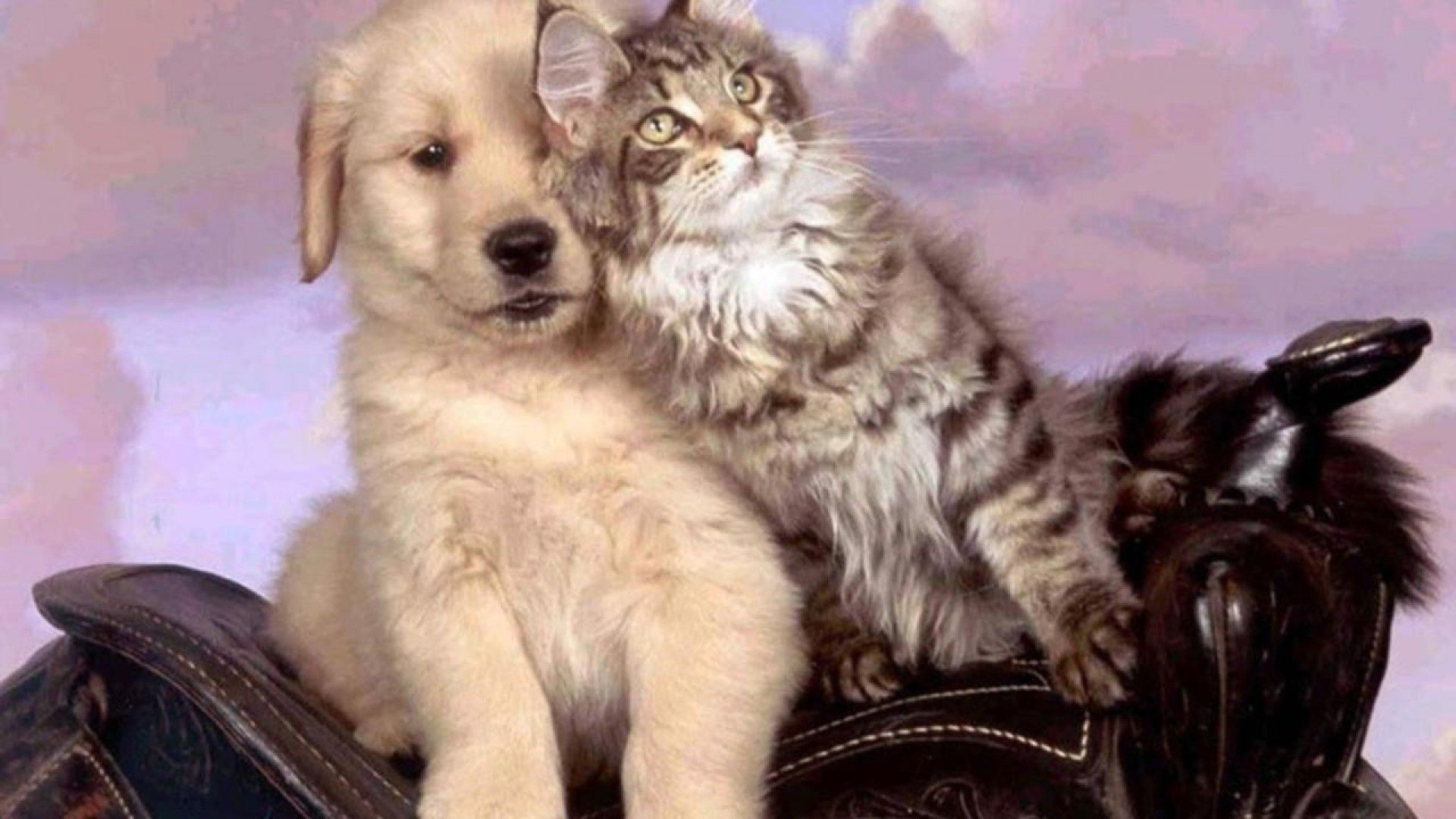 1920x1080 Cats Pet Love Animal Cat Puppy Kitten Dog Cats Animals Dogs .