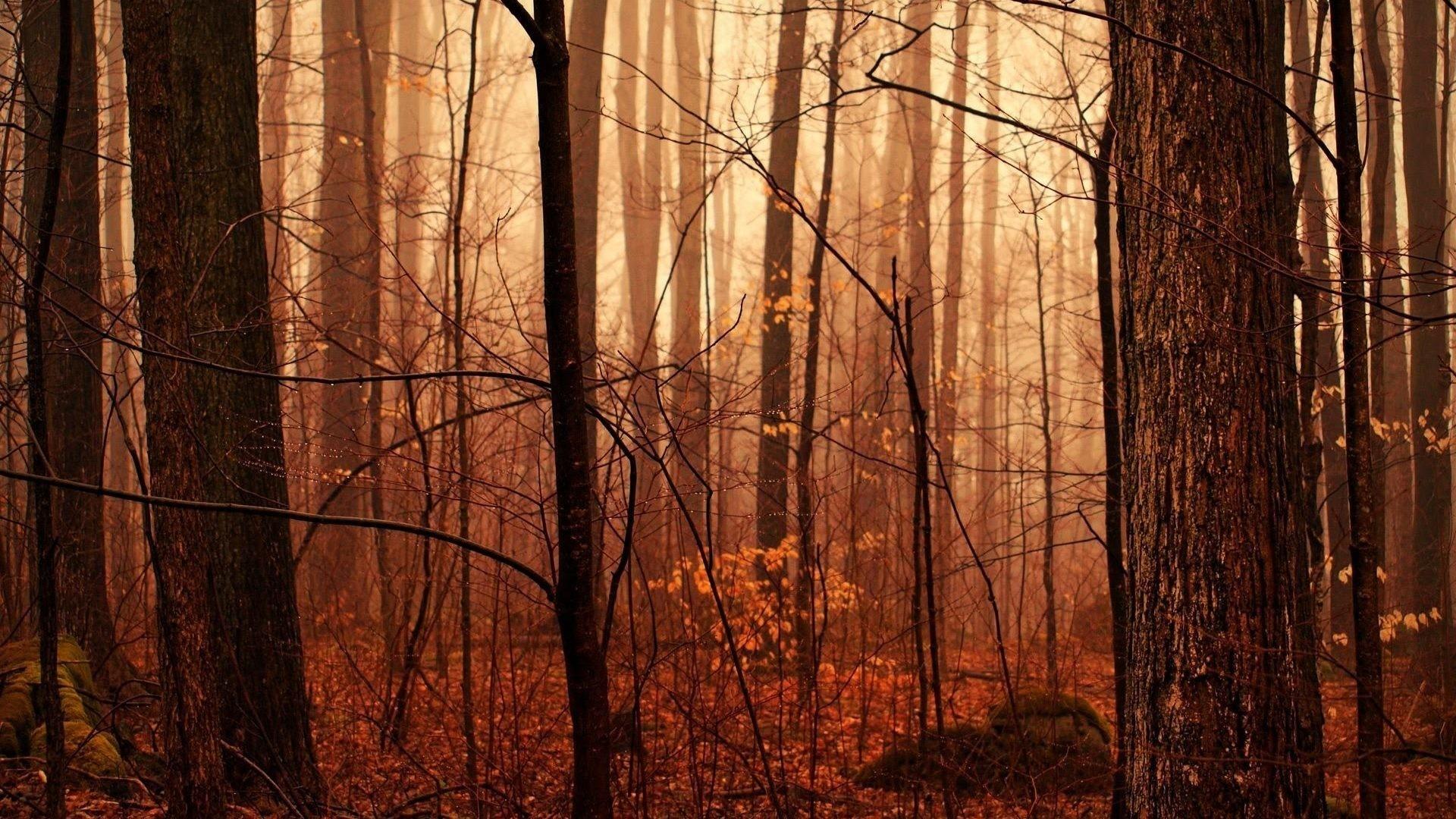 Wood Wallpaper 1080p 73 Images
