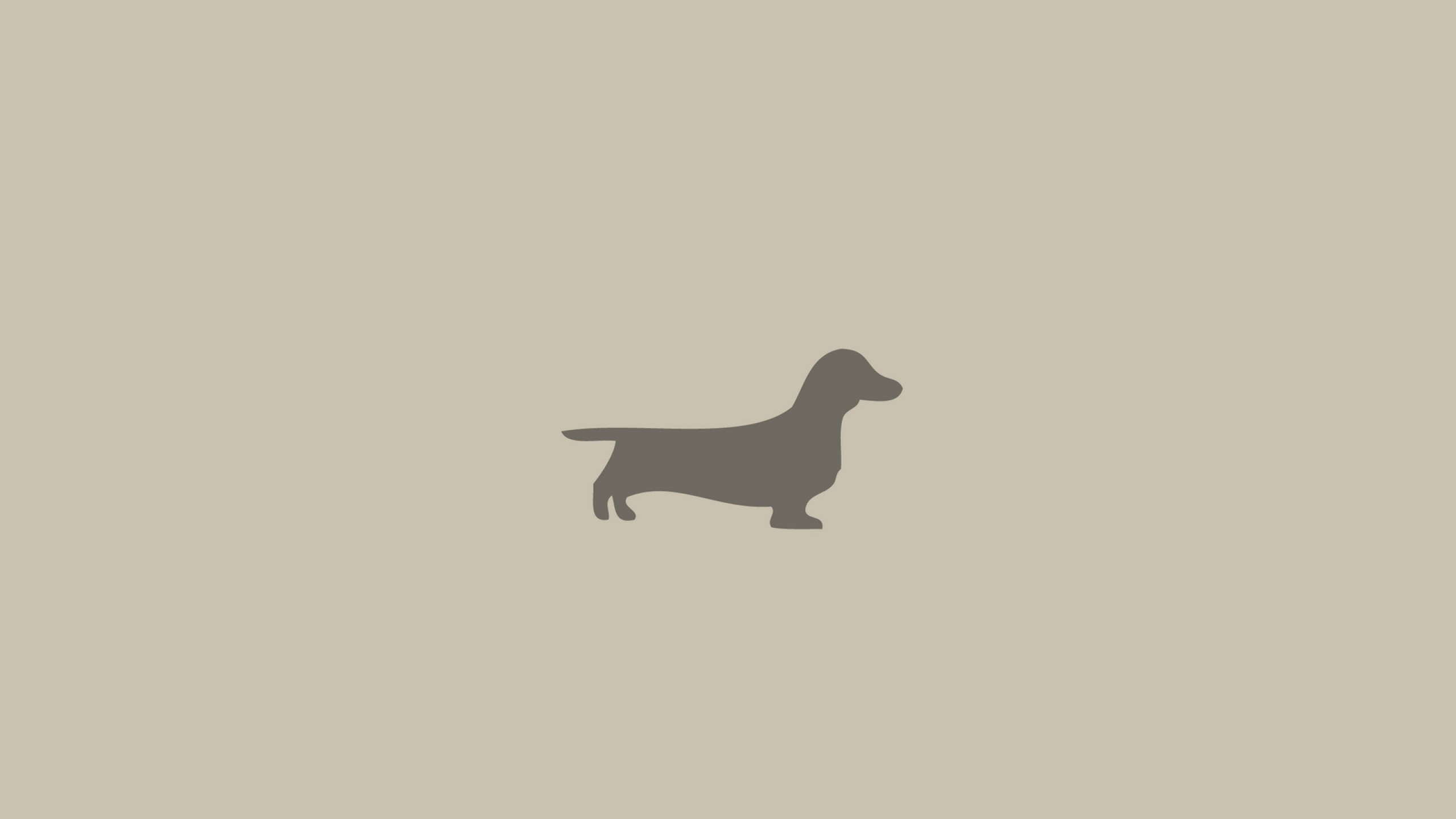 2560x1440  Wallpaper dachshund, dog, minimalism, animal