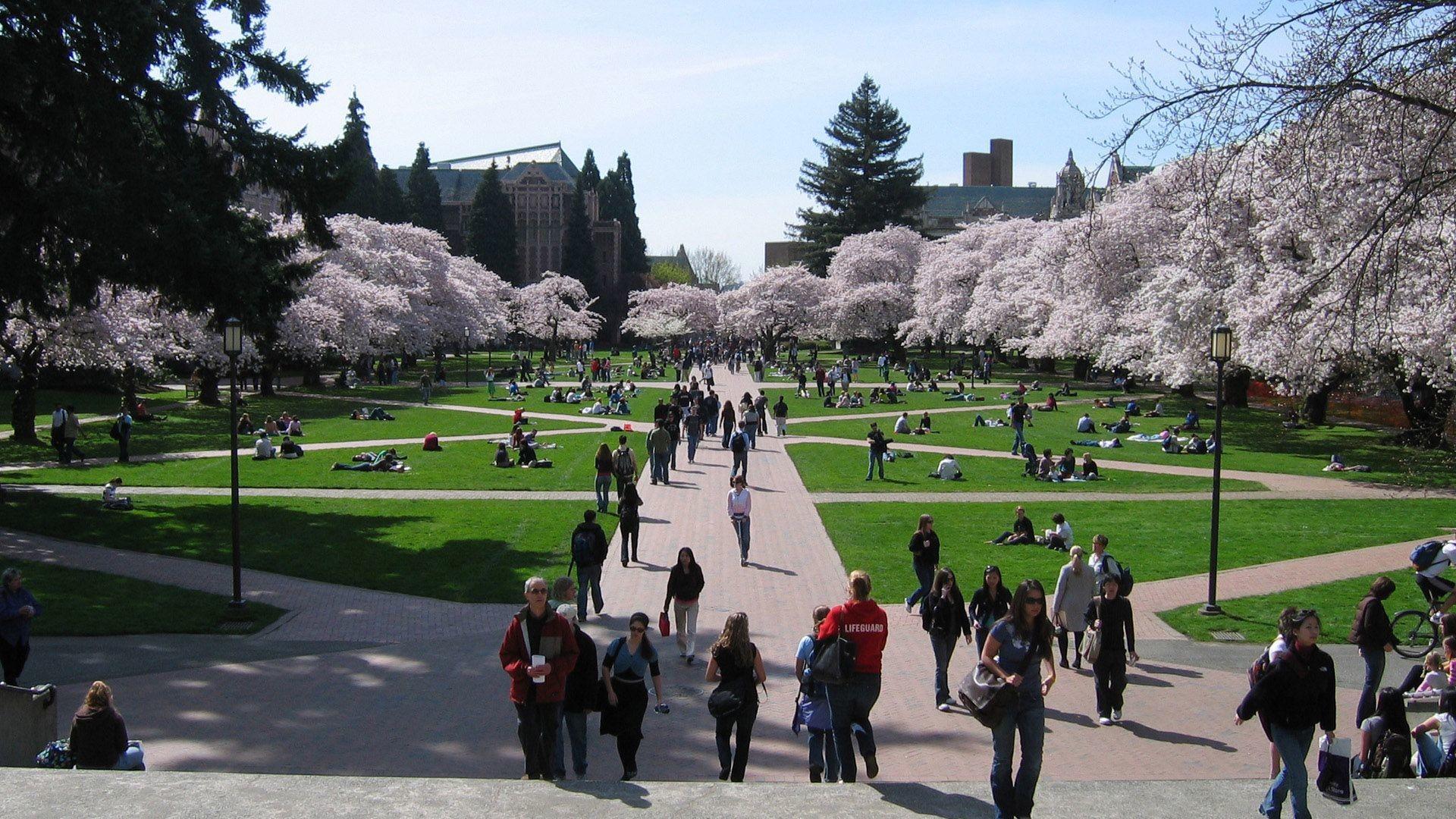University Of Washington Wallpaper 70 Images