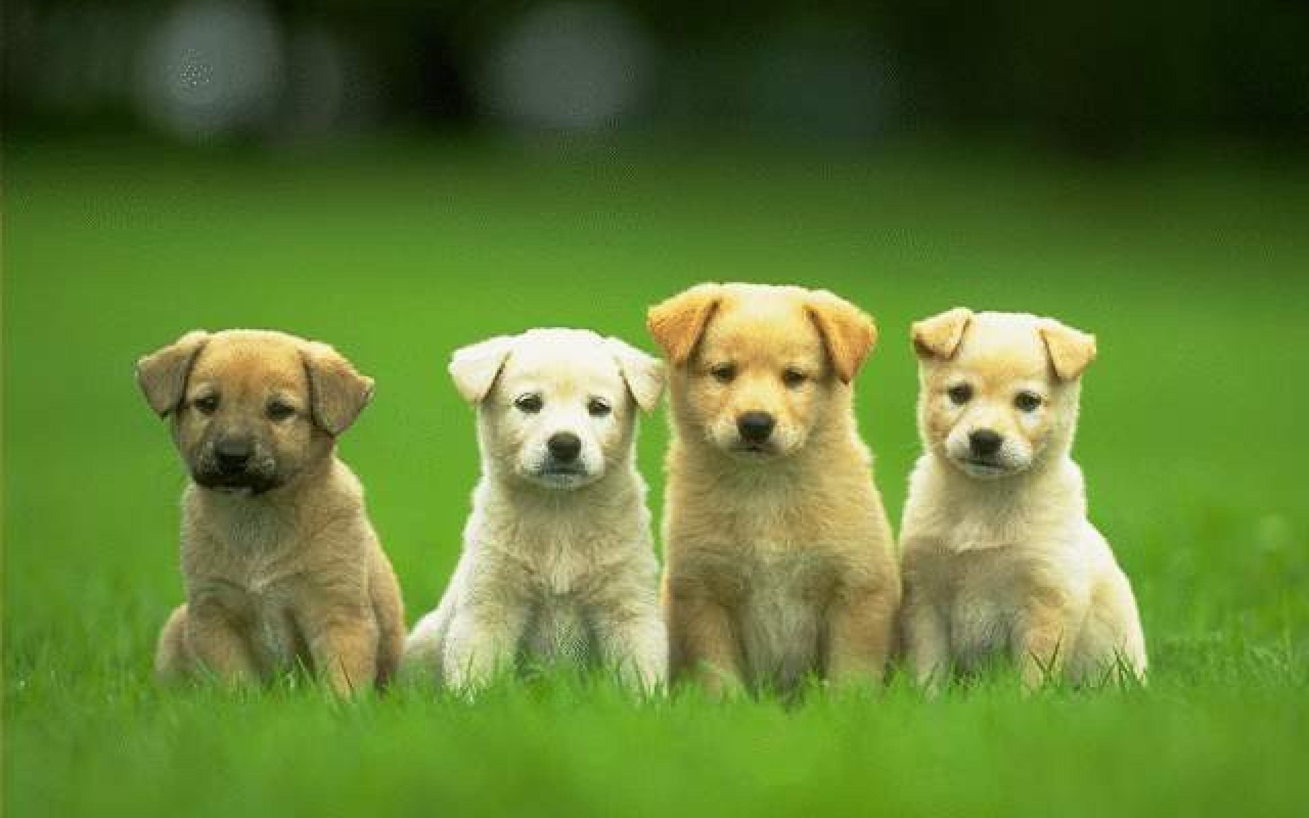 2560x1600 Dog Wallpapers Widescreen