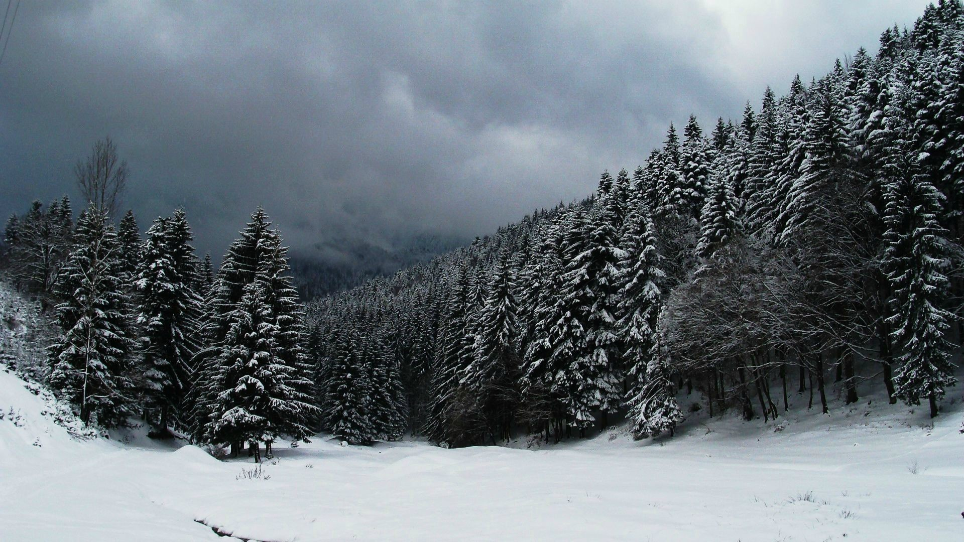 1920x1080 Clouds over snowy forest wallpaper #19361