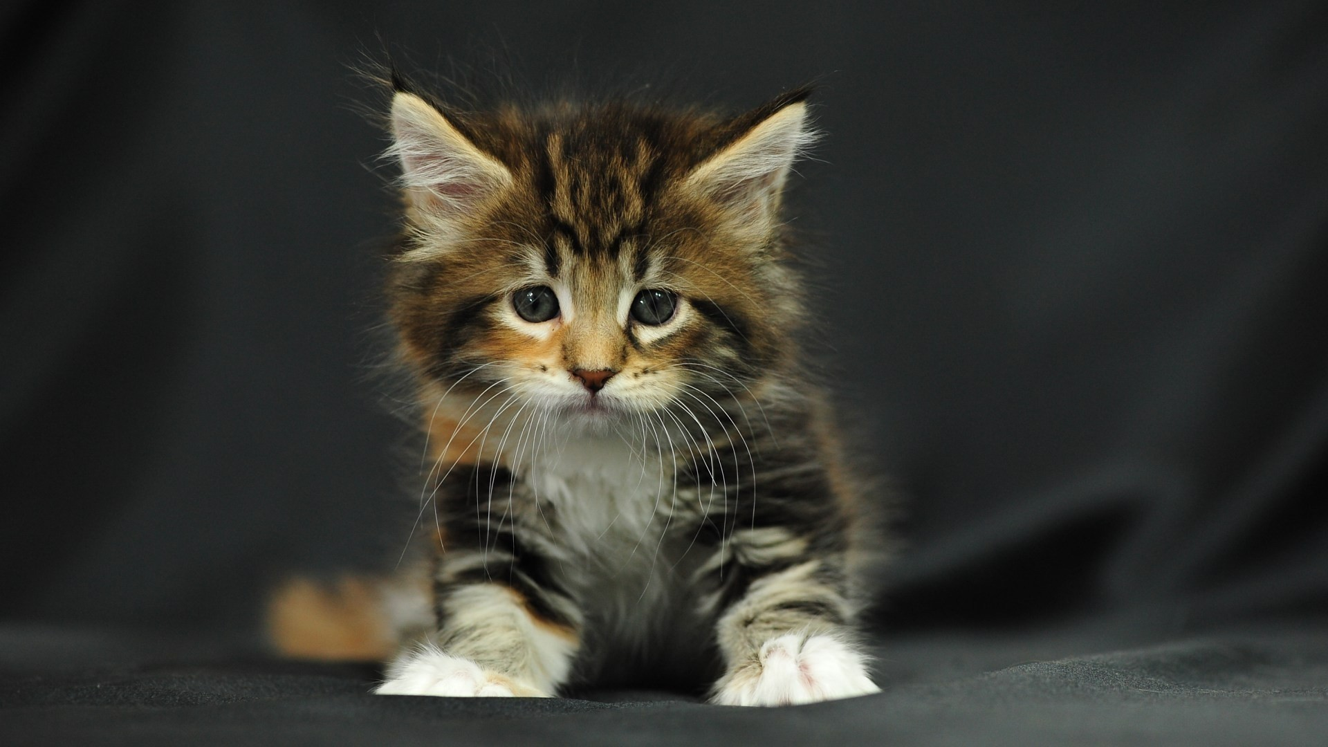 Baby kittens wallpaper 63 images - Kitten backgrounds ...