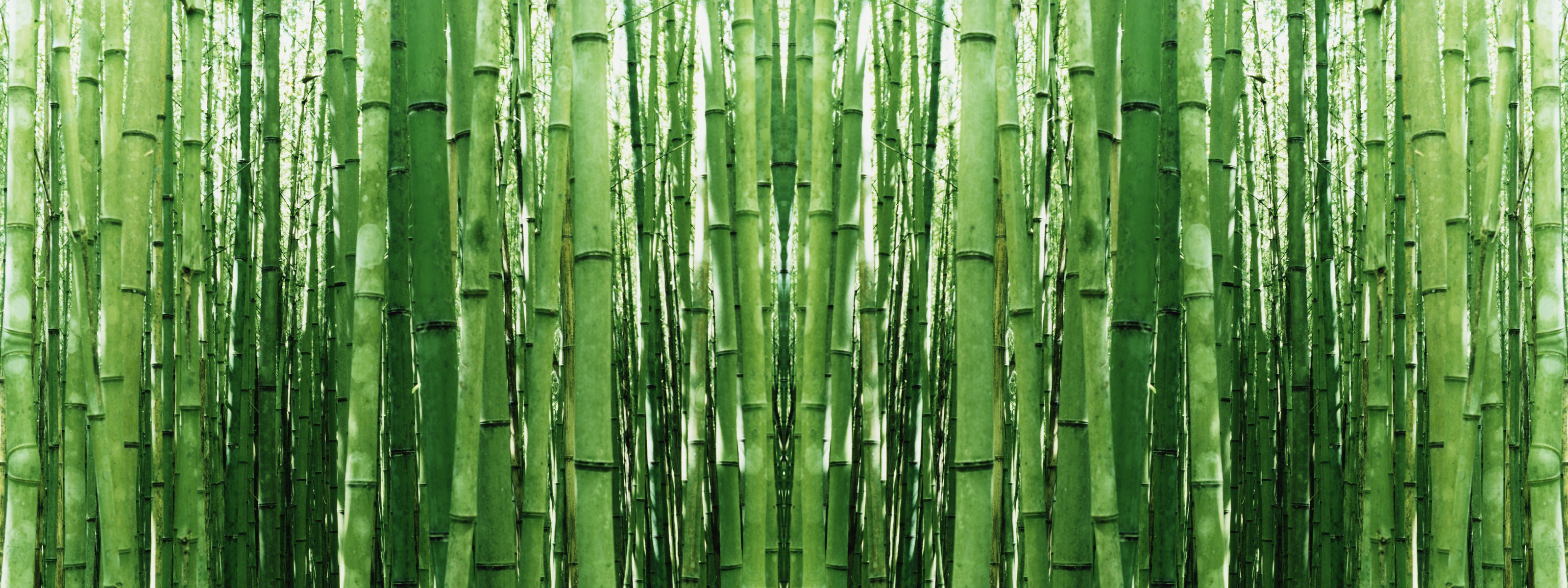 Bamboo Forest Japan Computer Wallpaper 51 Images