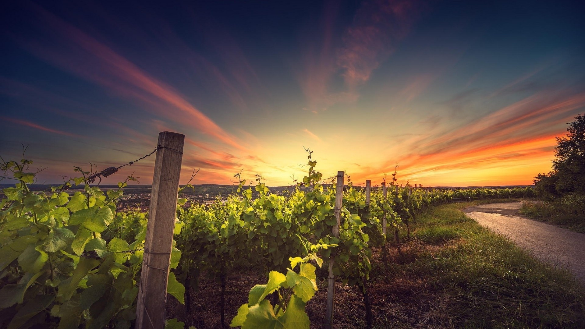 1920x1080 Vineyard Wallpaper 1920x1200. Download resolutions: Desktop:  ...