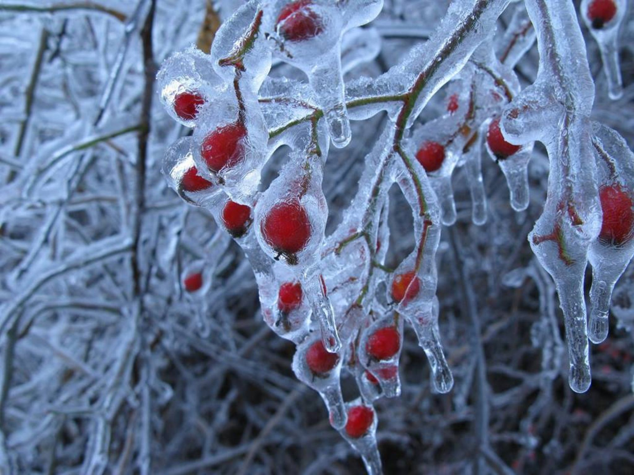 2048x1536 Snow And Ice, Extreme Weather, Frozen Cherries, Winter Berries, Red Berries