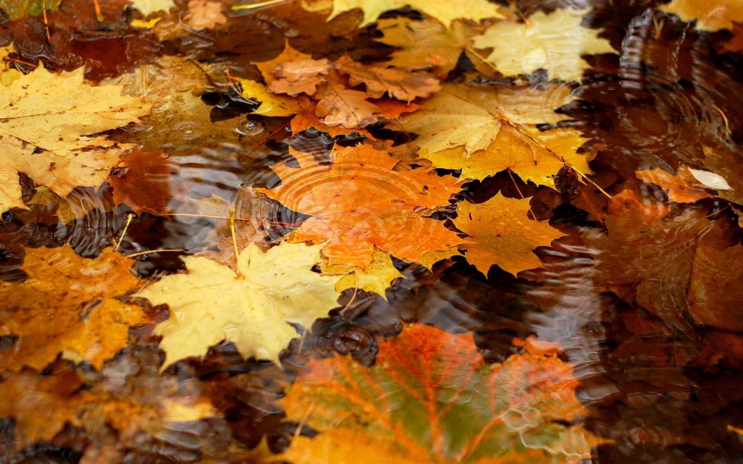 Desktop Wallpaper Autumn Leaves 65 Images