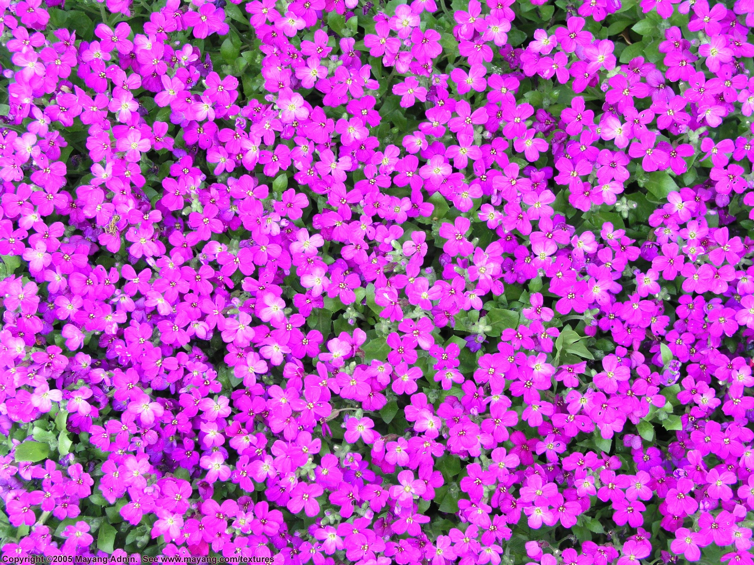 Purple Flower Background 66 Images