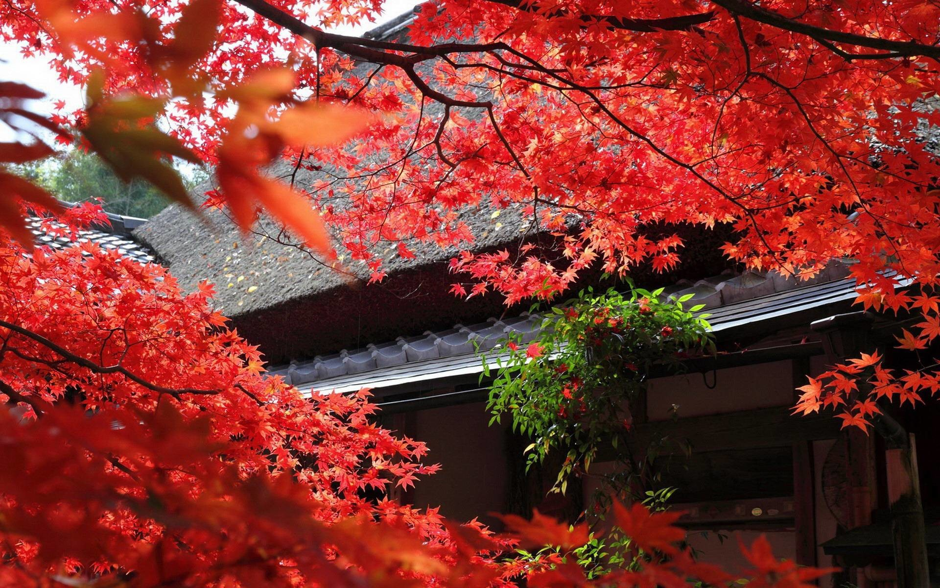 Japanese Garden Wallpapers: Japanese Screensavers And Wallpaper (68+ Images