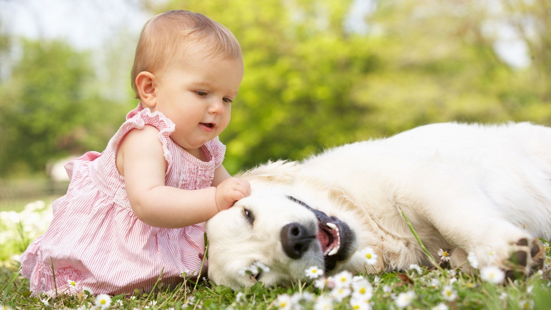 1920x1080 4640 Views 1659 Download Cute Baby Playing With Dog In Garden HD Wallpaper
