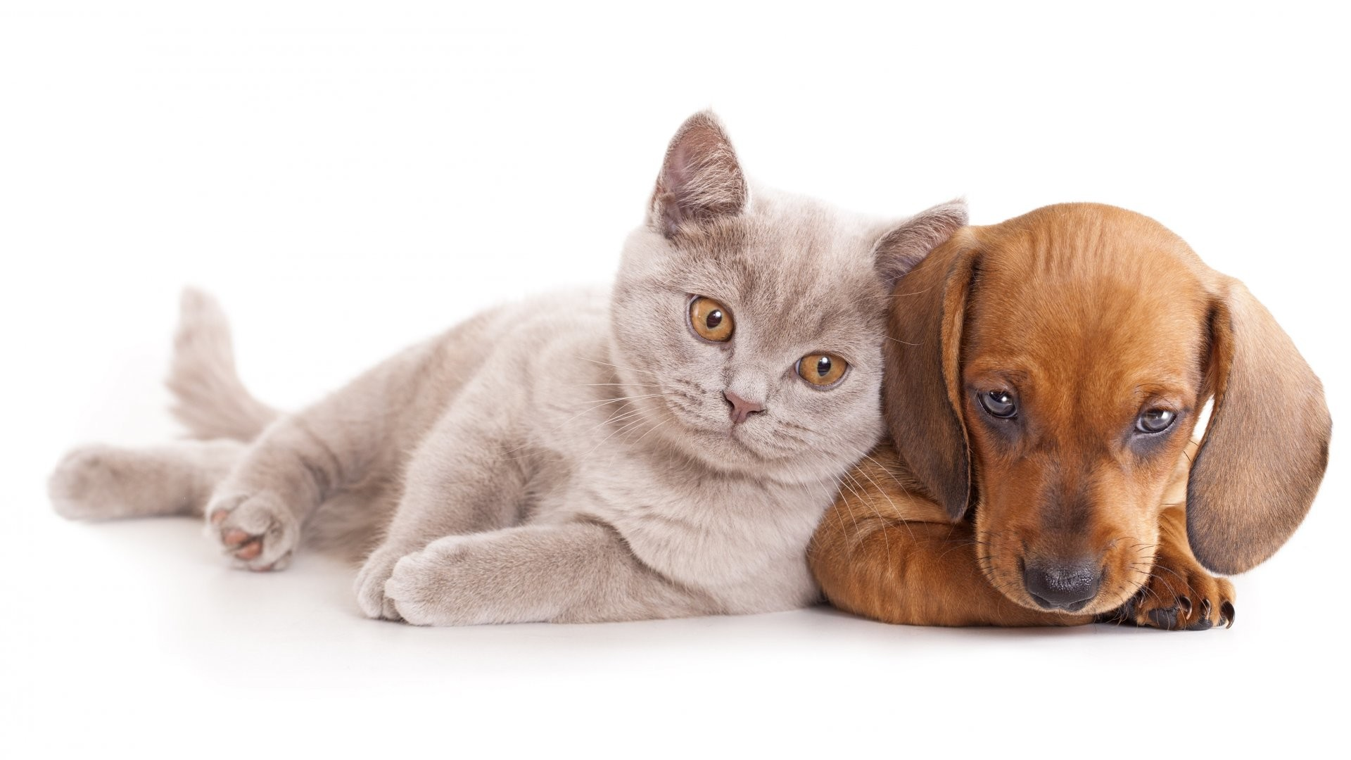 1920x1080 Best Cute cat dog free stock photos download