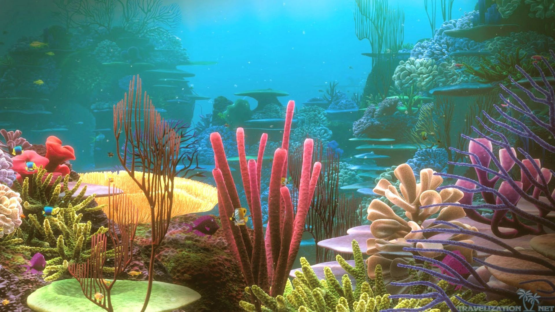 1920x1080 Awesome Coral Reef HD Wallpaper Free Download 1920×1080 Coral Reef Images  Wallpapers (41