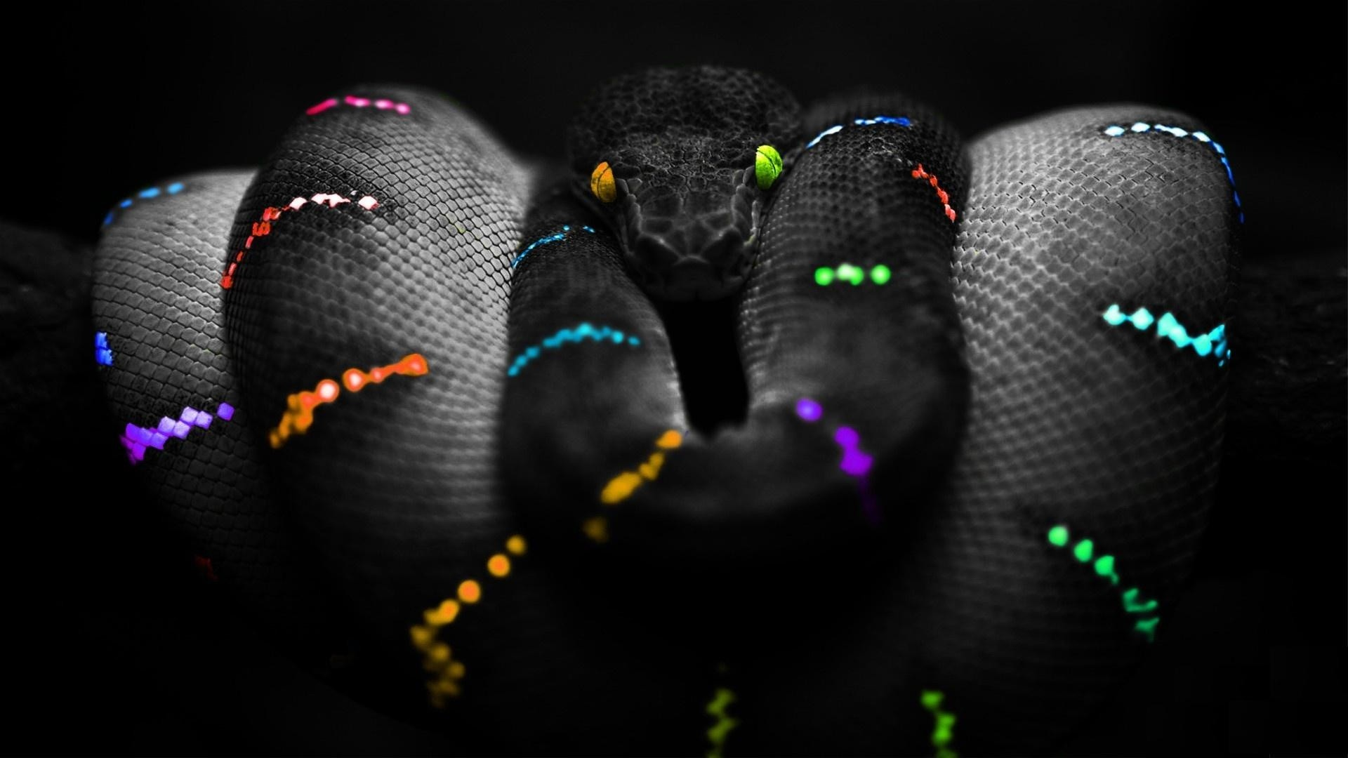 Black Mamba Wallpapers 69 Images