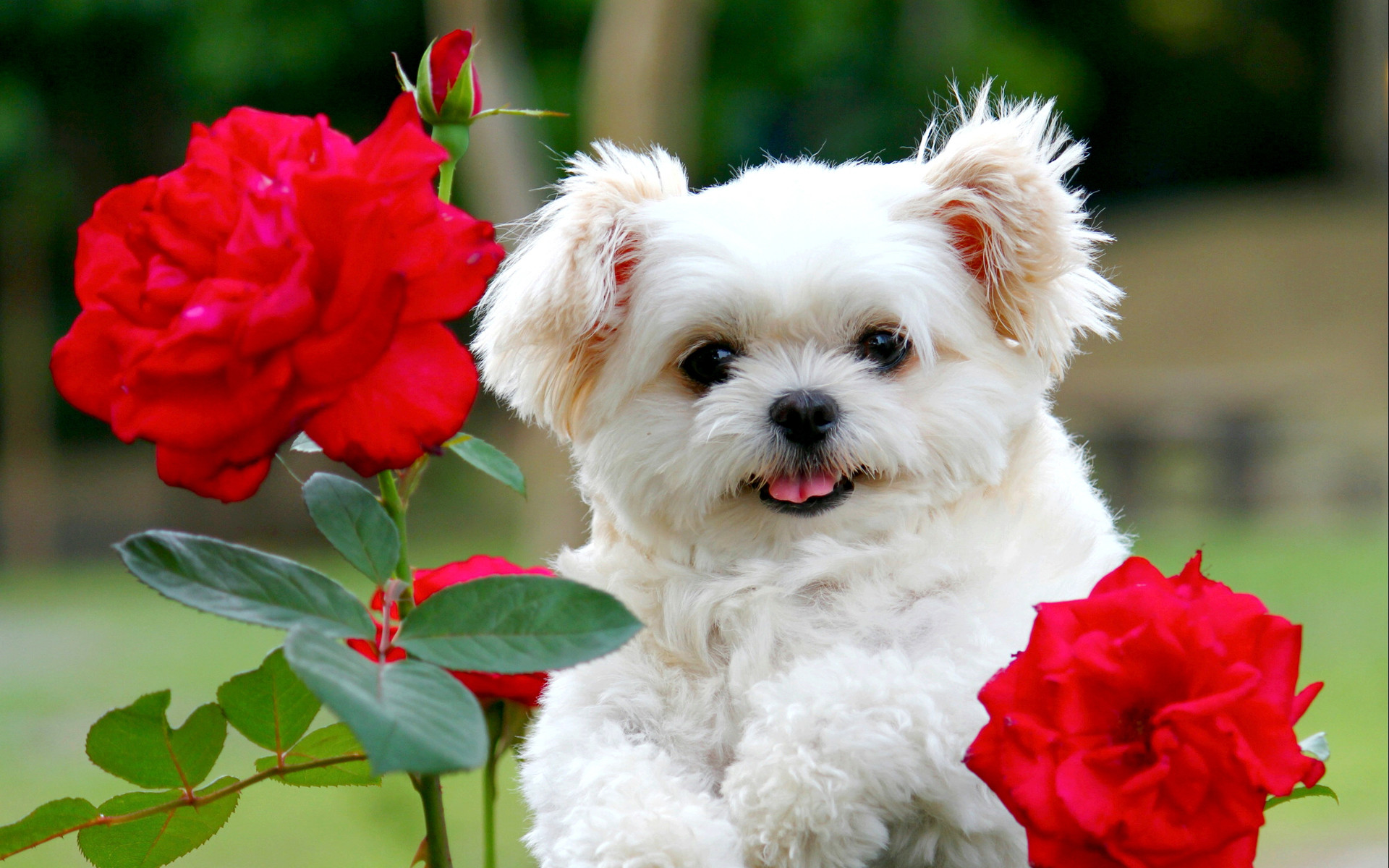 1920x1200 Awesome Ideas About Cute Puppy Puppies Backgrounds With Wallpapers Of Hd As  Well As Astonishing The Cutest Puppy Ever Wallpaper