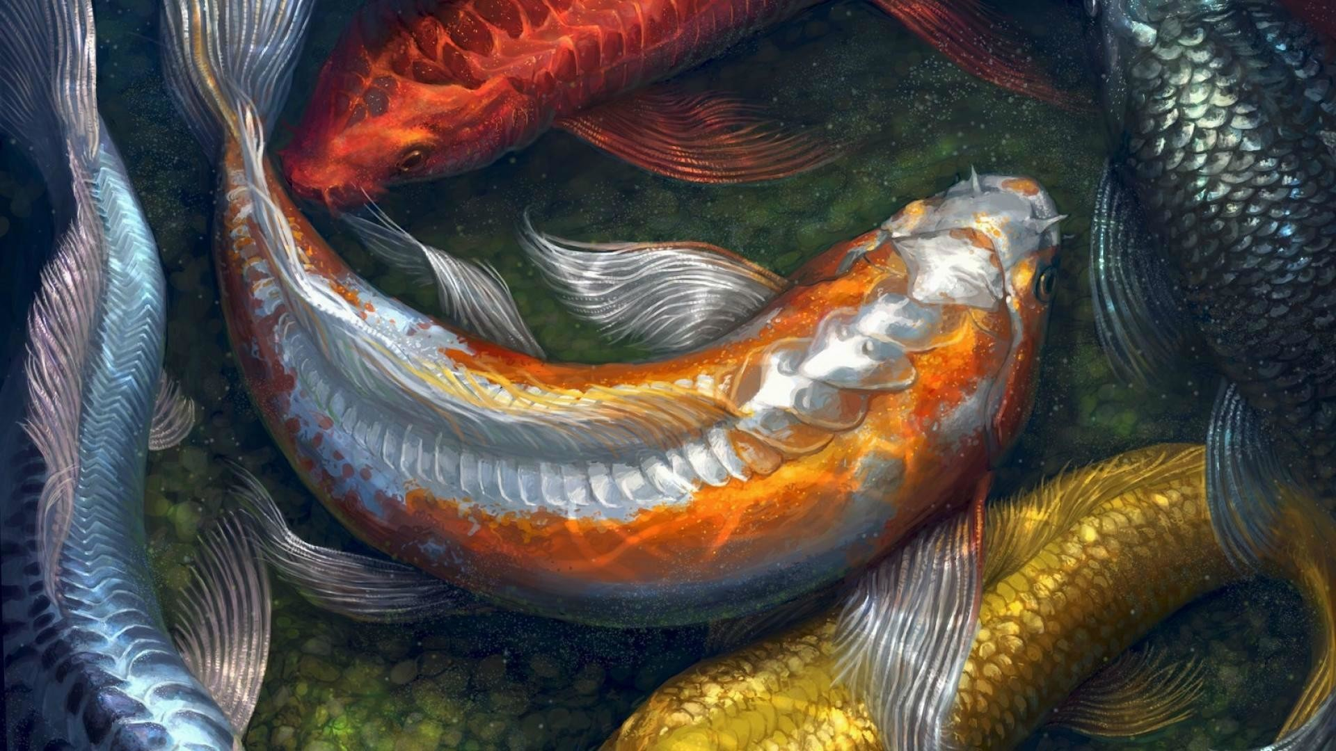 "koi live wallpaper pro version aa"" hd wallpaper"
