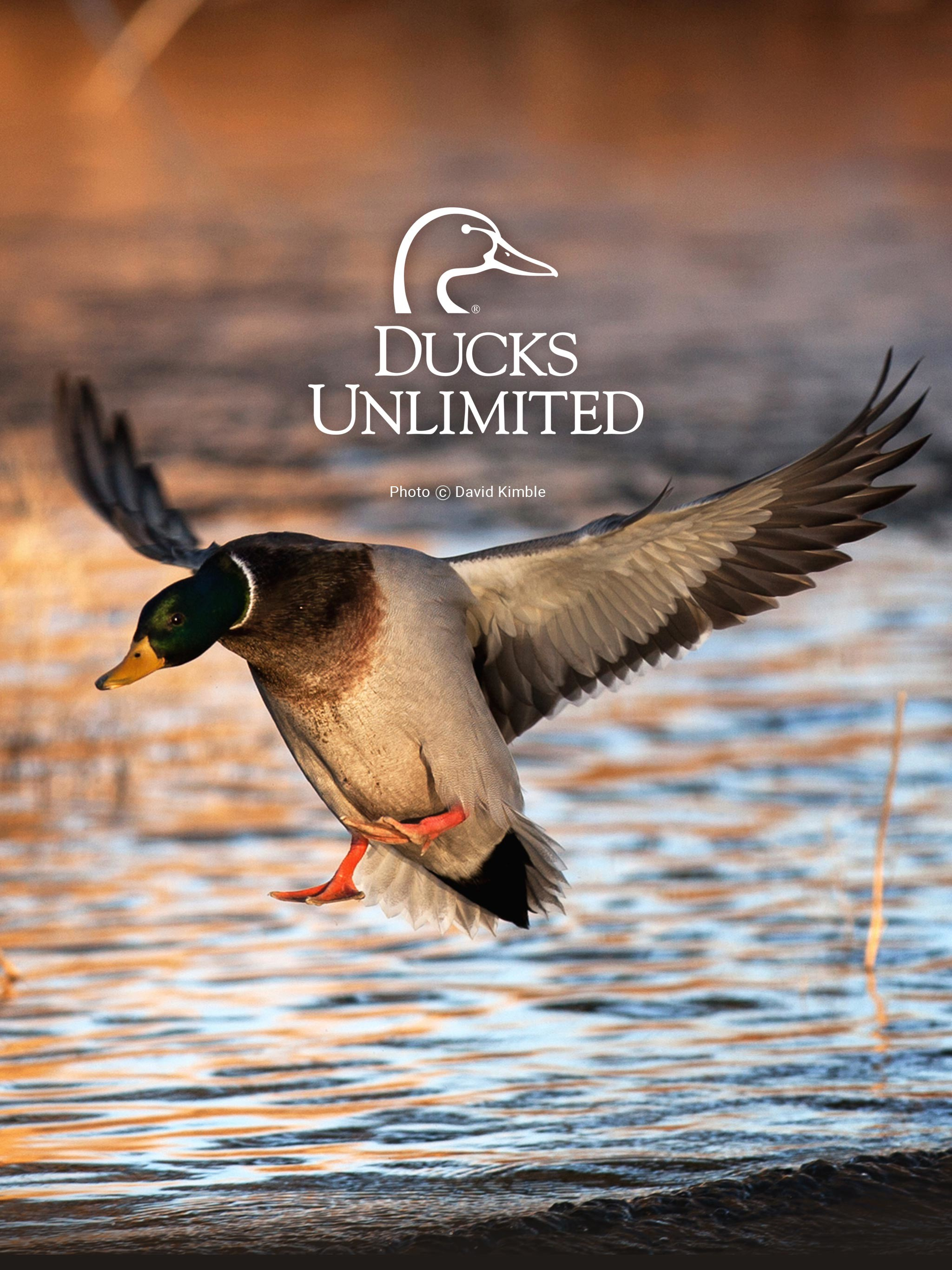 Waterfowl wallpaper 51 images - Hunting wallpaper for android ...