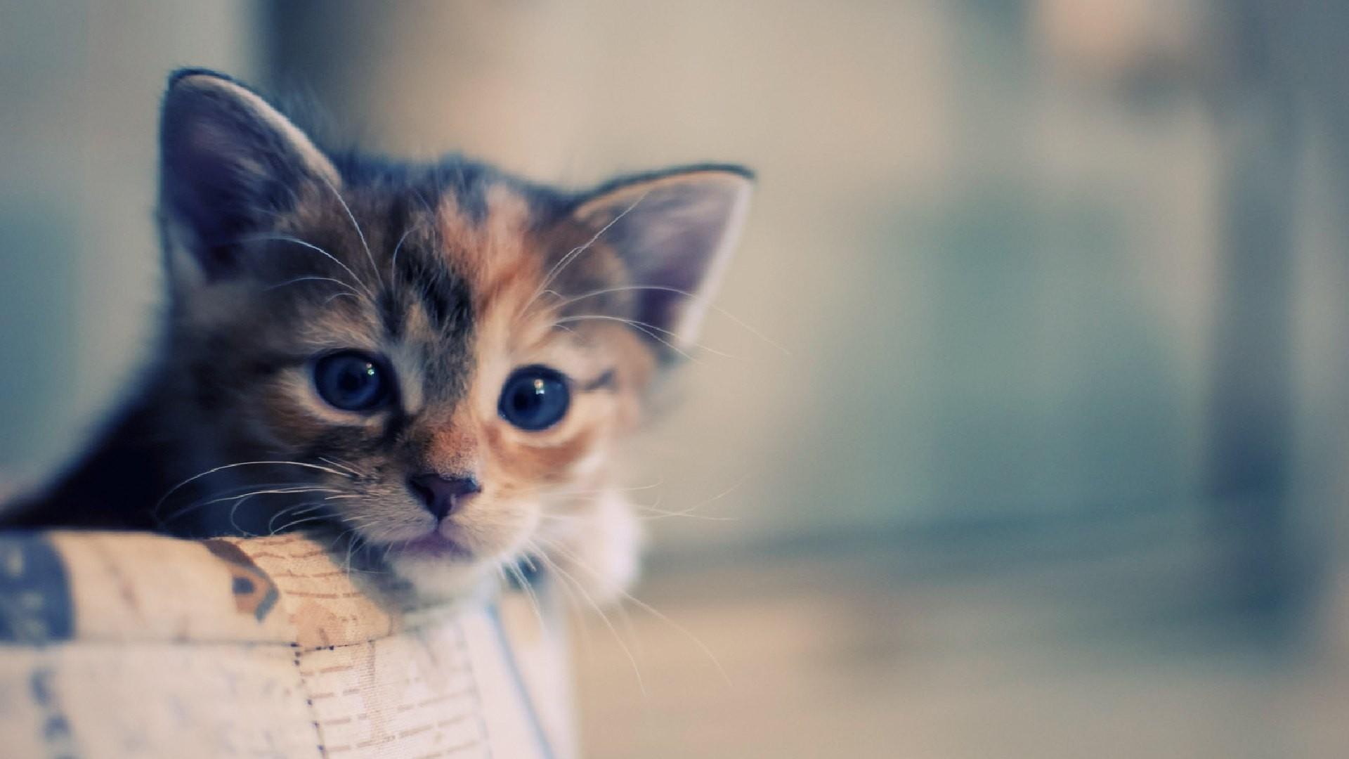 Grumpy Cat Wallpapers HD (61+ Images