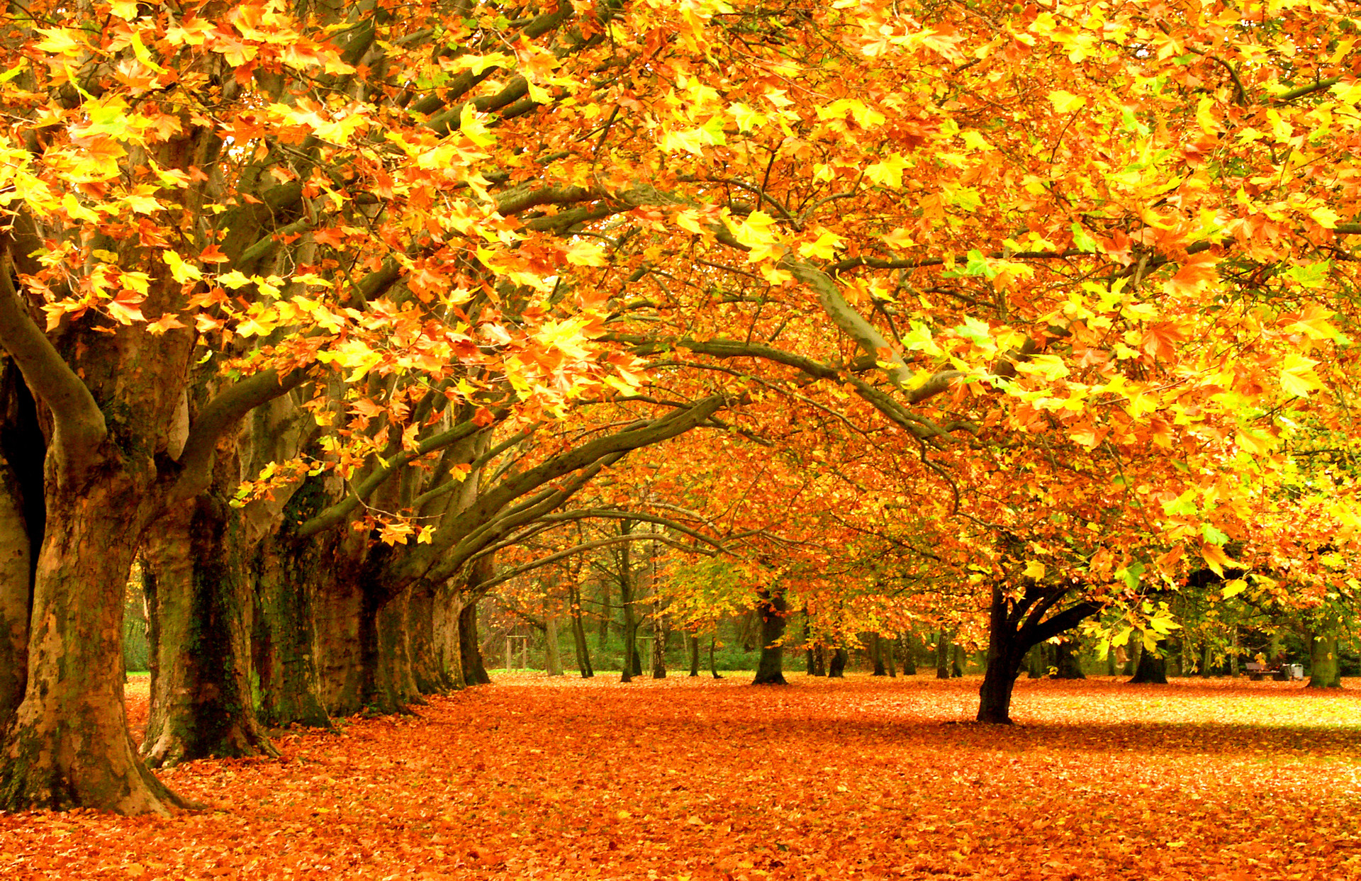 1920x1243 Beautiful Autumn Forest Wallpaper PC Wallpaper