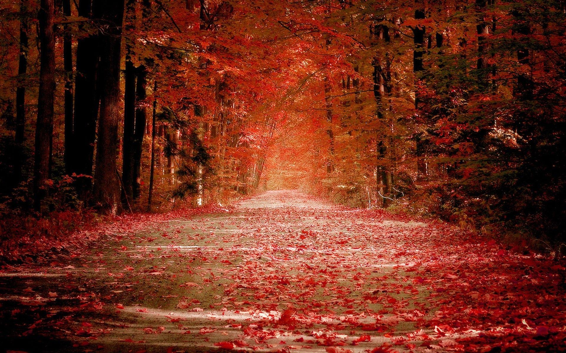 1920x1200 Silent Road At Red Autumn Wallpaper Widescreen Hd