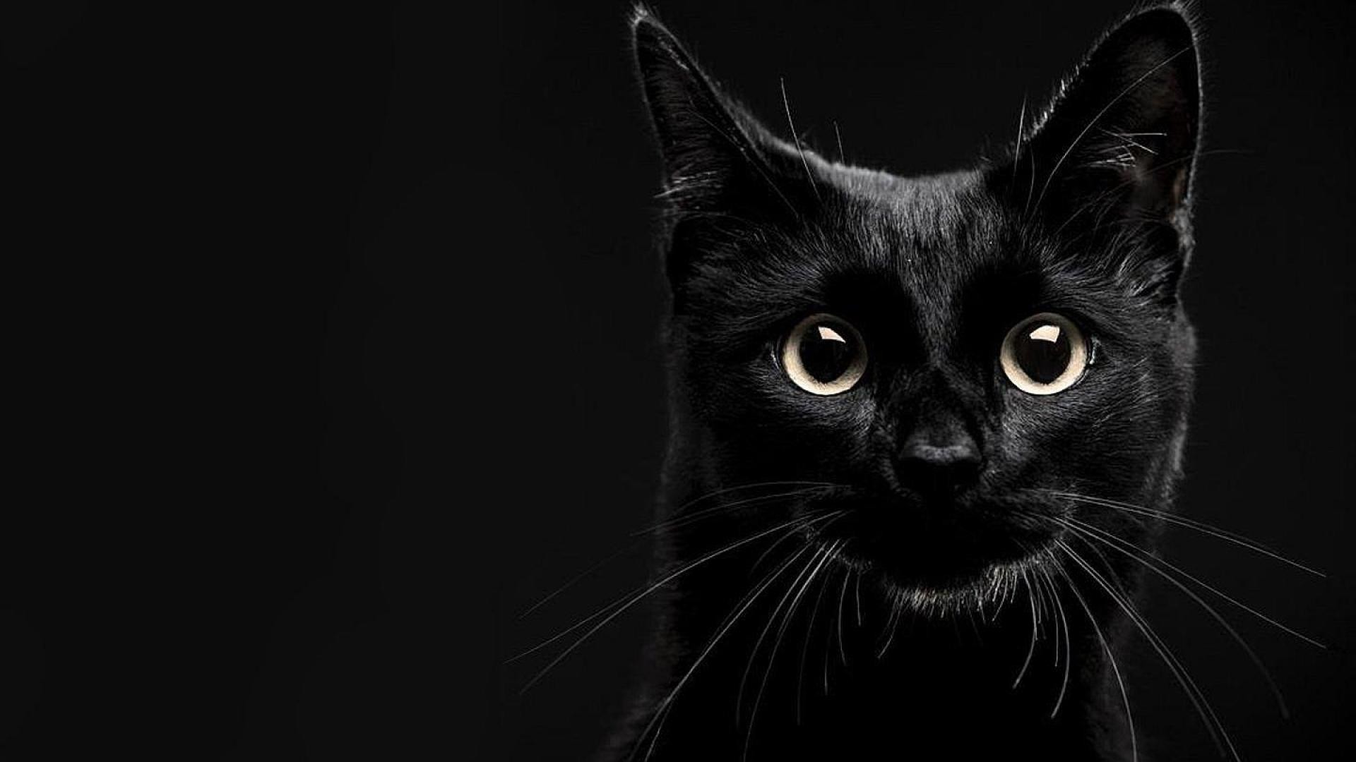 Black Cat Wallpapers (71+ images)