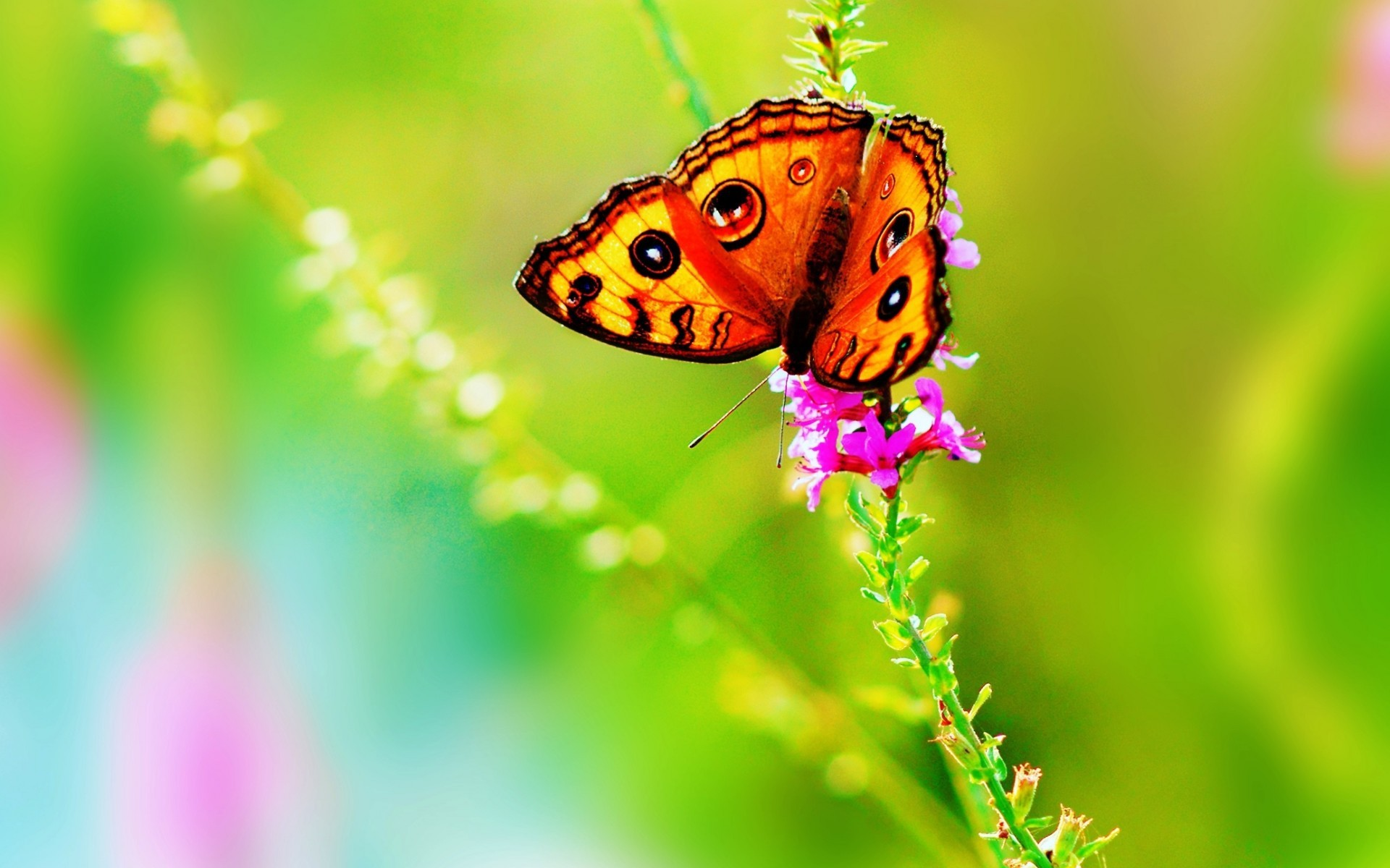 1920x1200 Butterfly hd wallpapers. Â«