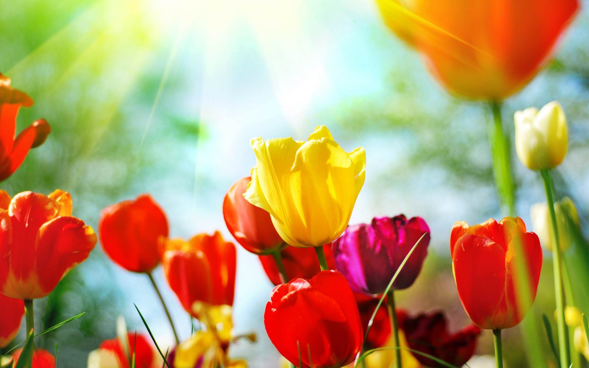 desktop wallpaper spring flowers (60+ images)
