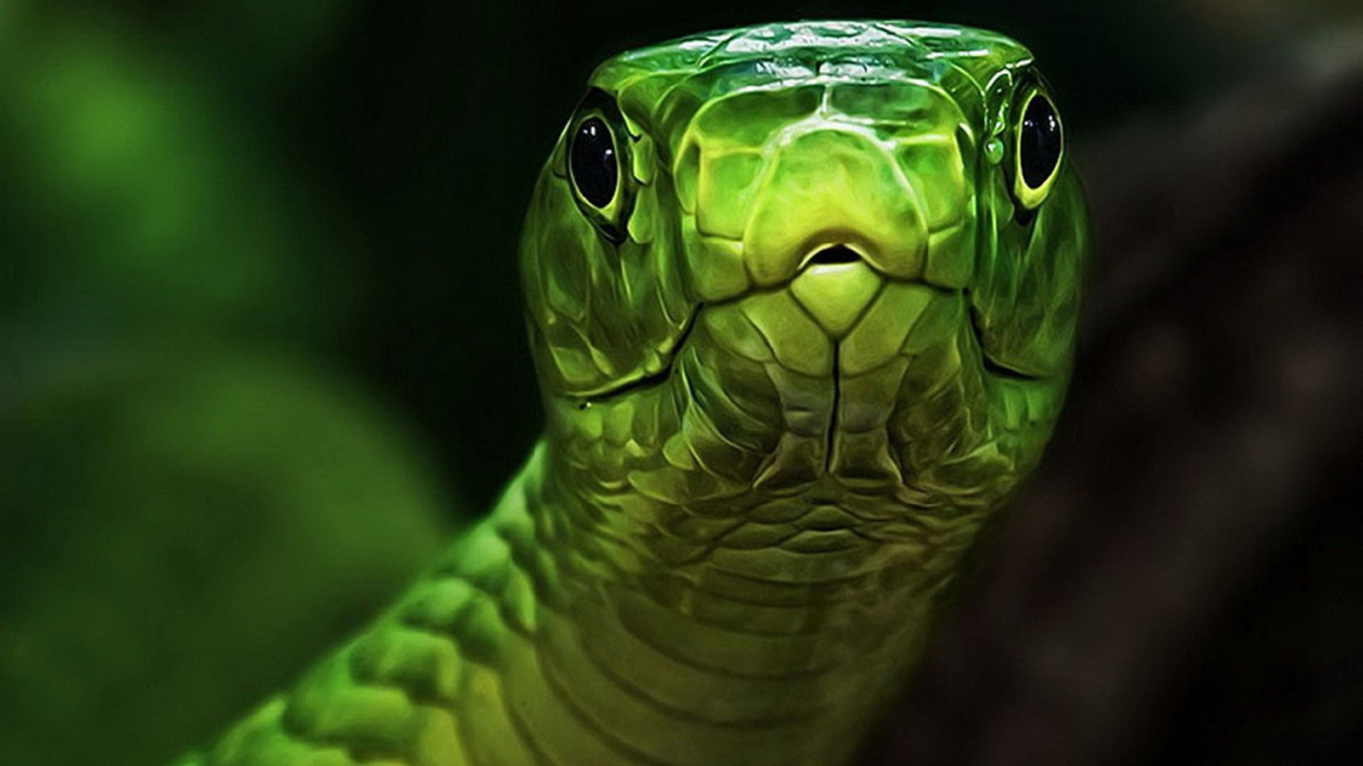 1920x1080 hd-pics-photos-green-snake-reptiles-nature-animals-