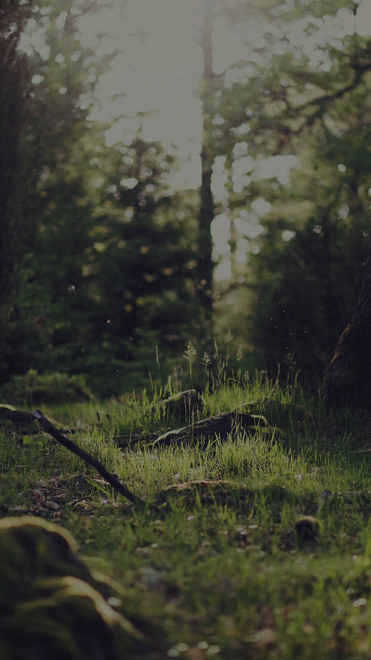 Forest Wallpaper Iphone 4k