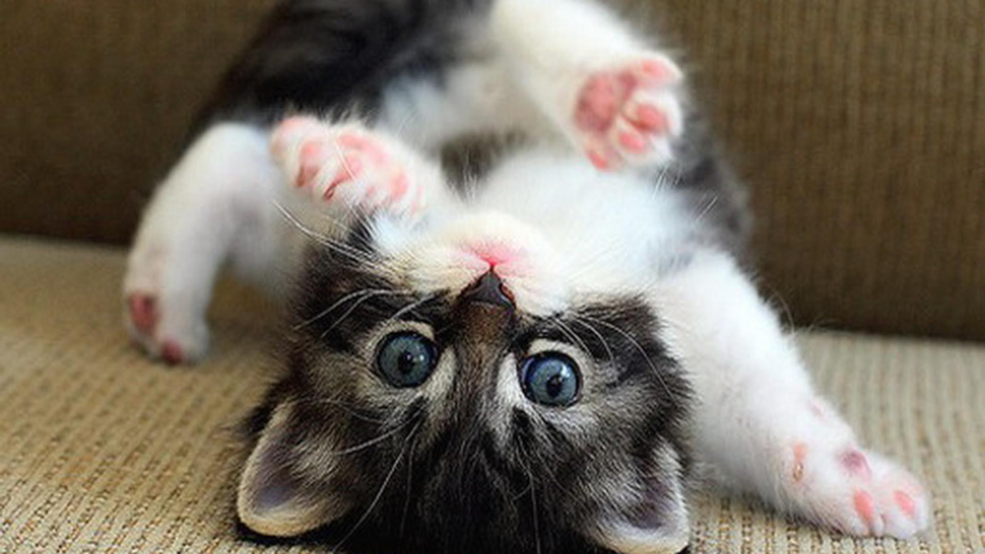 Baby Kitten Wallpaper 60 Images