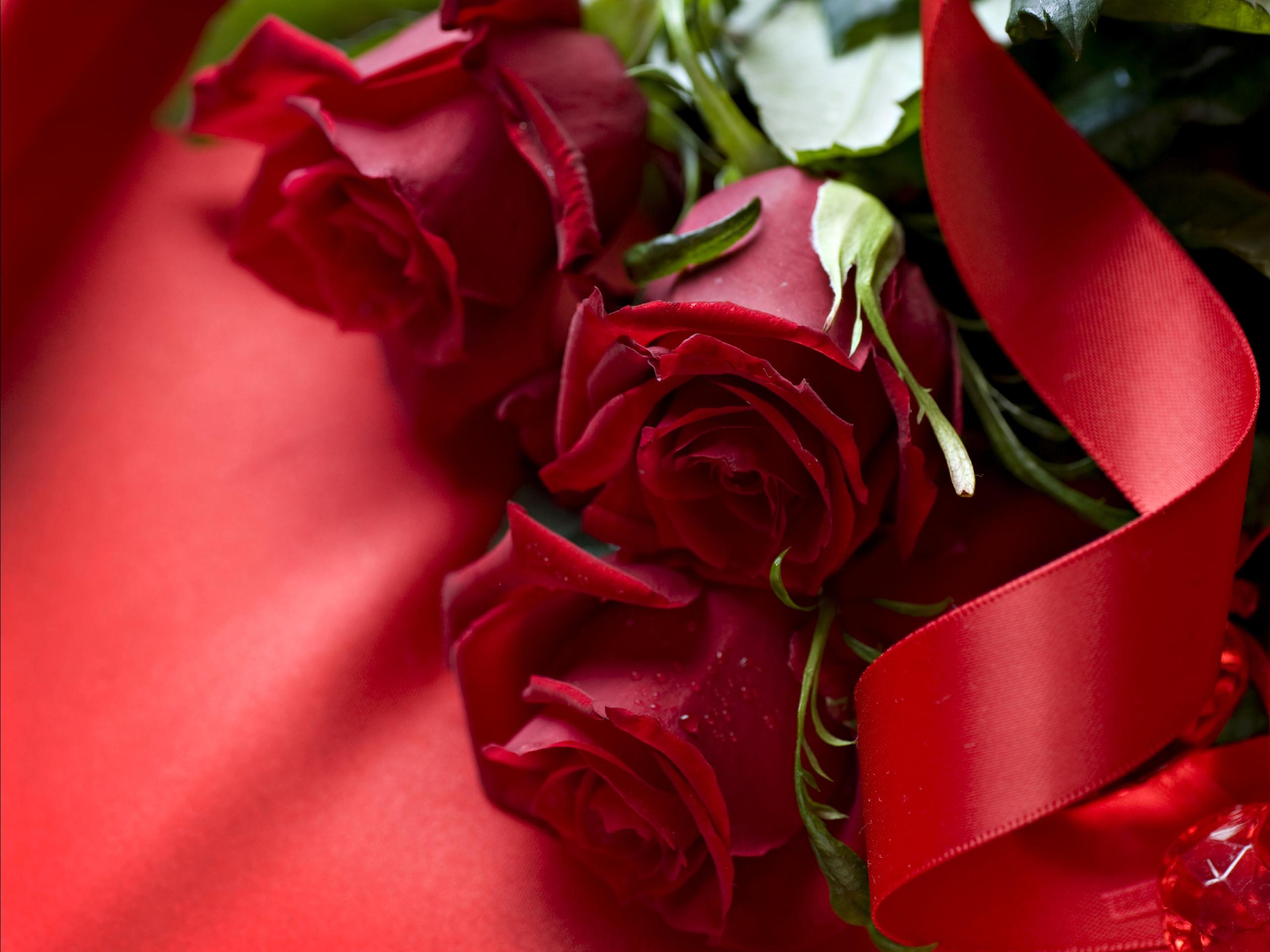 Beautiful Rose Wallpapers HD (62+ images)
