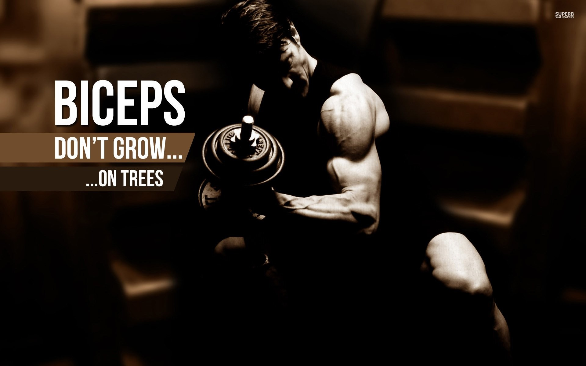 1920x1200 Body-building fitness muscle muscles weight lifting Bodybuilding (60)  wallpaper |  | 415606 | WallpaperUP